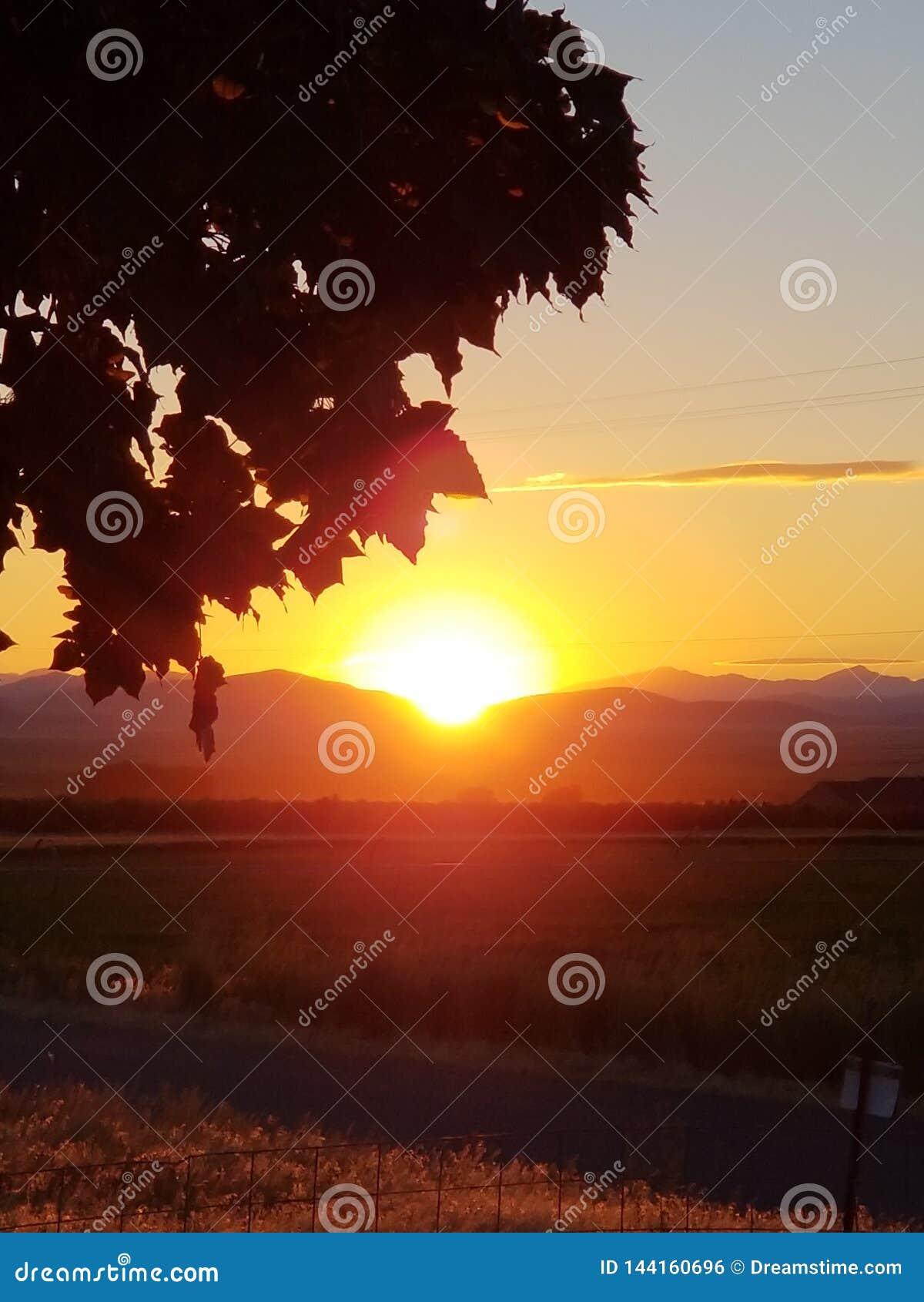 Ahornsonnenuntergang