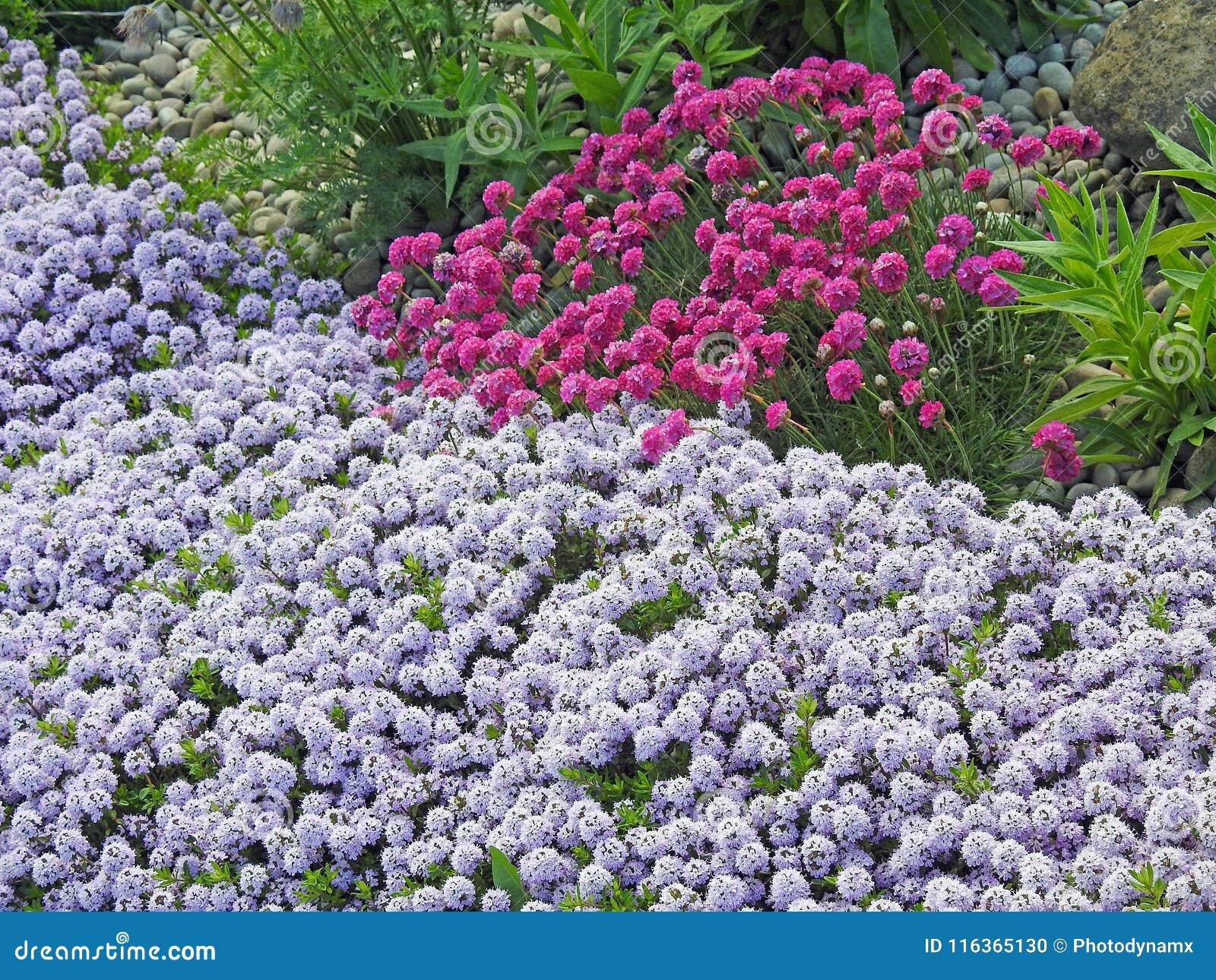 Ahorro Natural De Las Plantas Del Jardin De Flores Salvajes Foto De - Plantas-de-jardin-con-flores