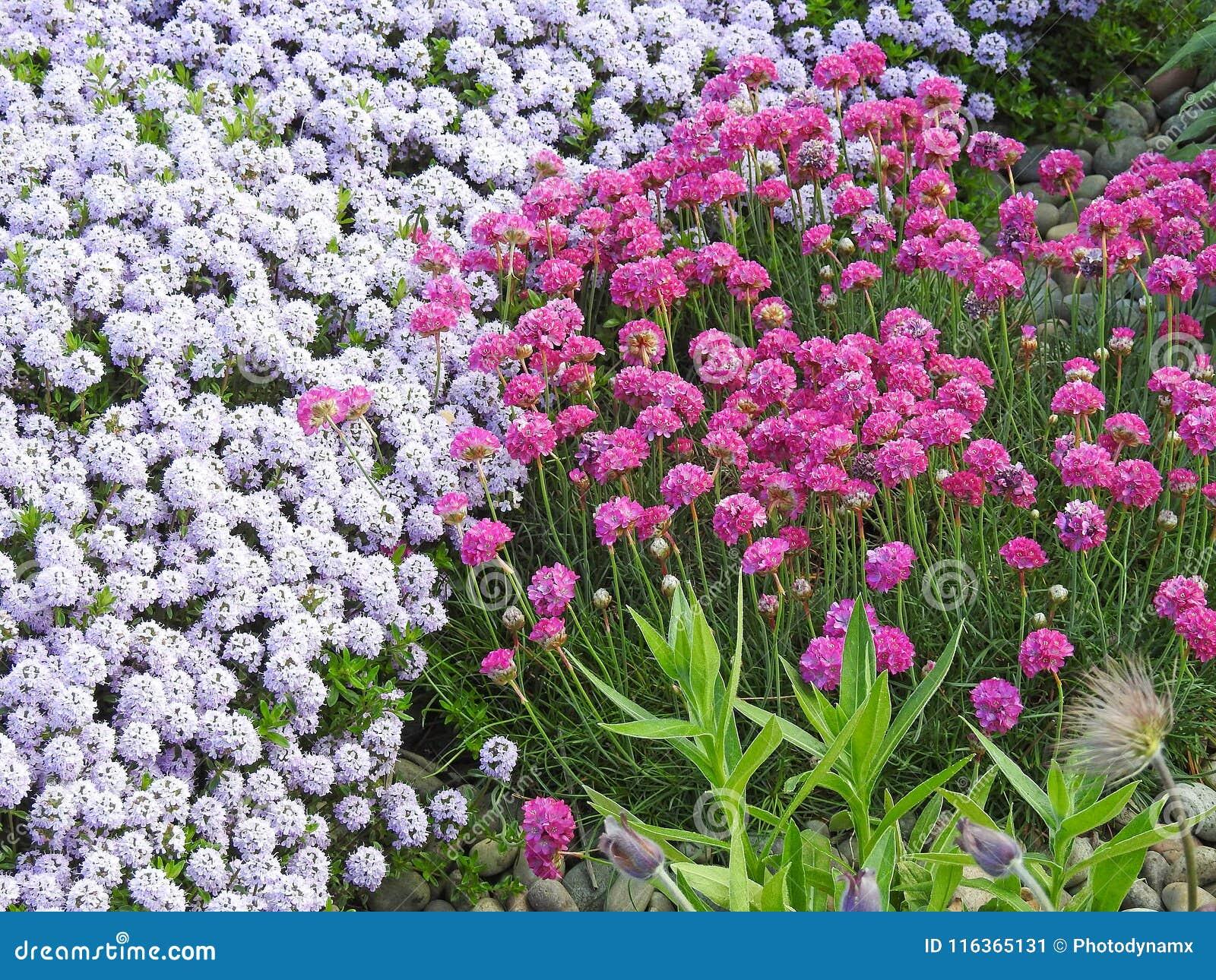 Ahorro Natural De Las Plantas Del Jardin De Flores Salvajes Imagen - Plantas-de-jardin-con-flores