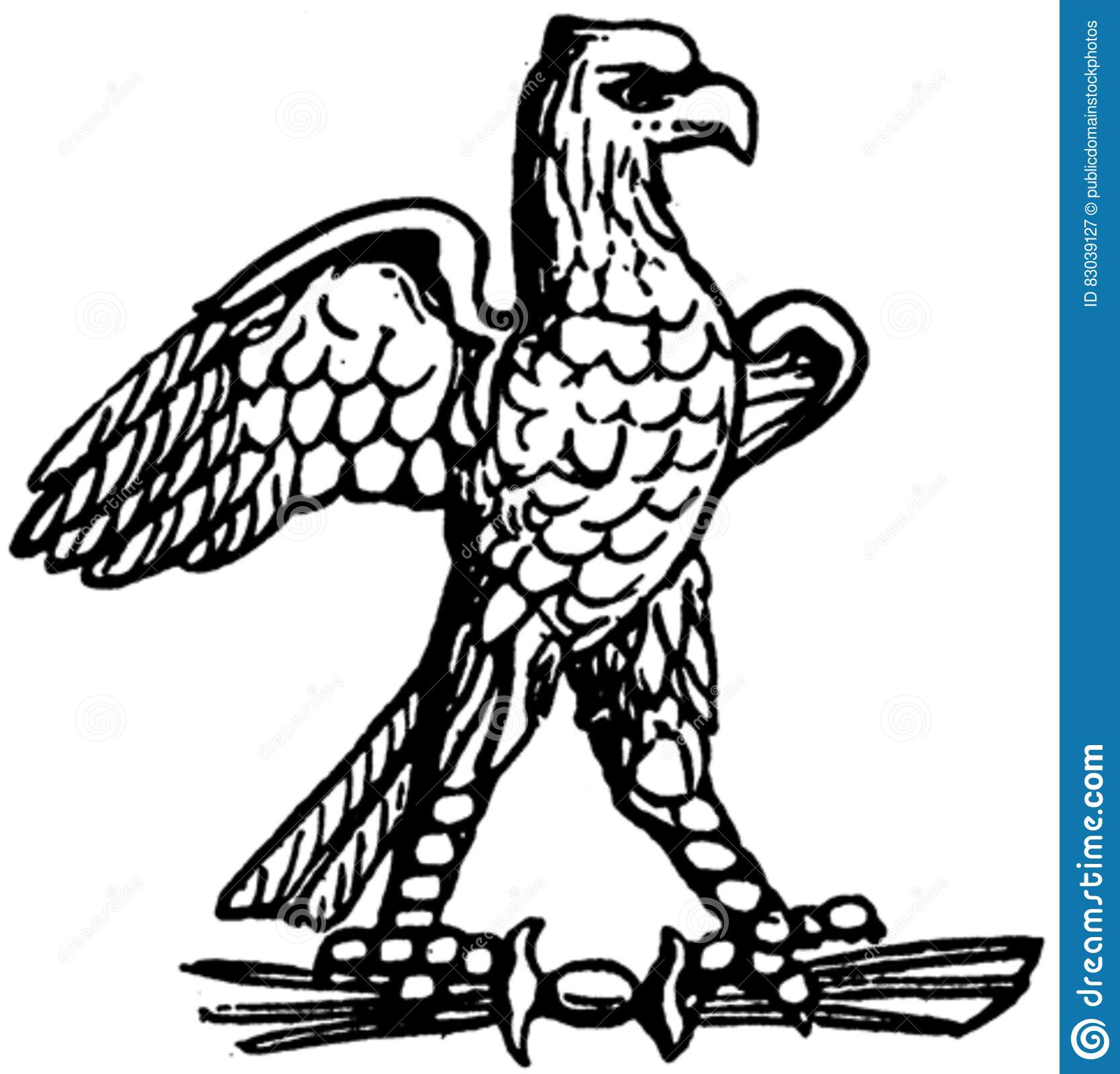 Download Aigle-008 stock image. Image of  - 83039127