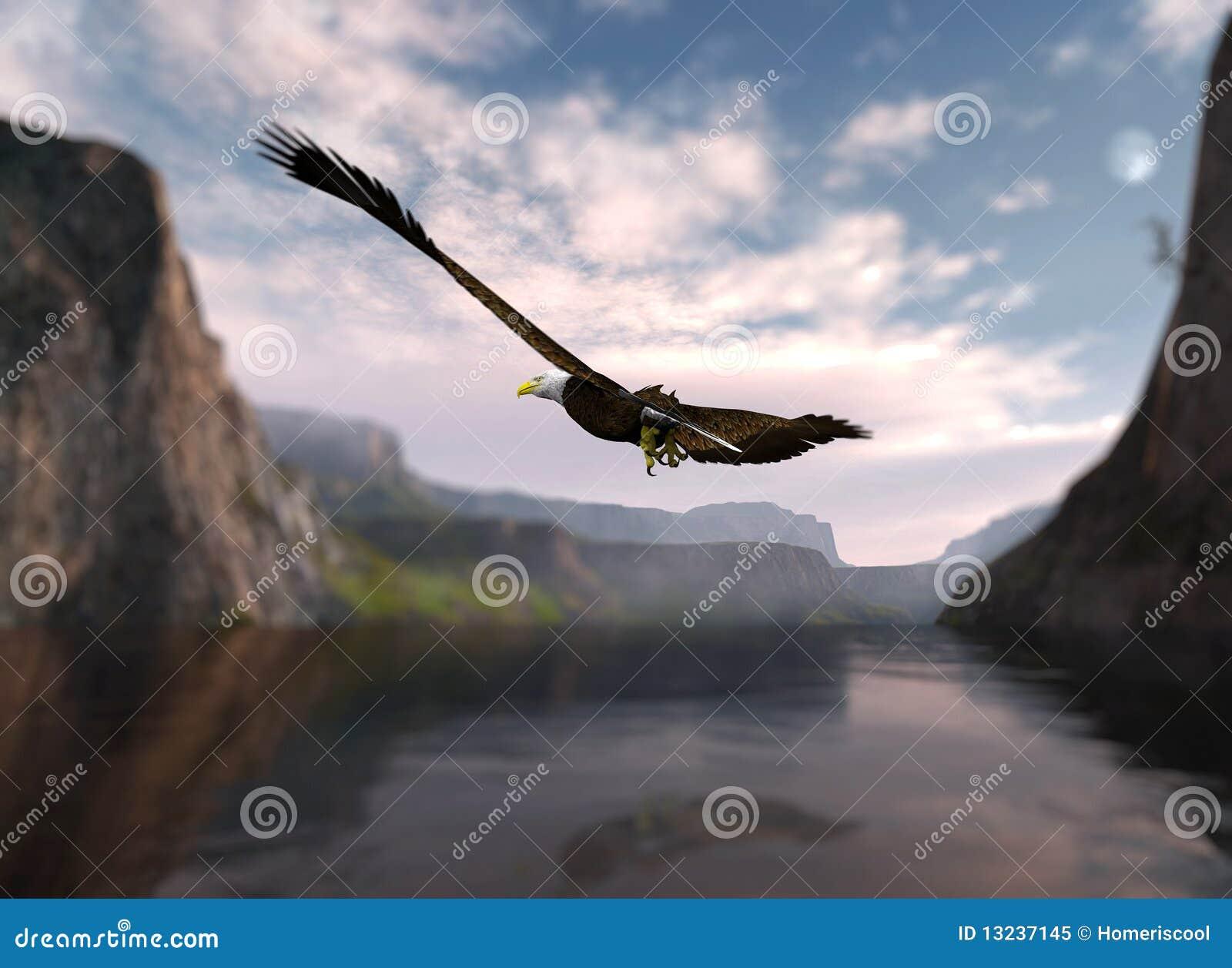 Aigle montant au-dessus de l eau.