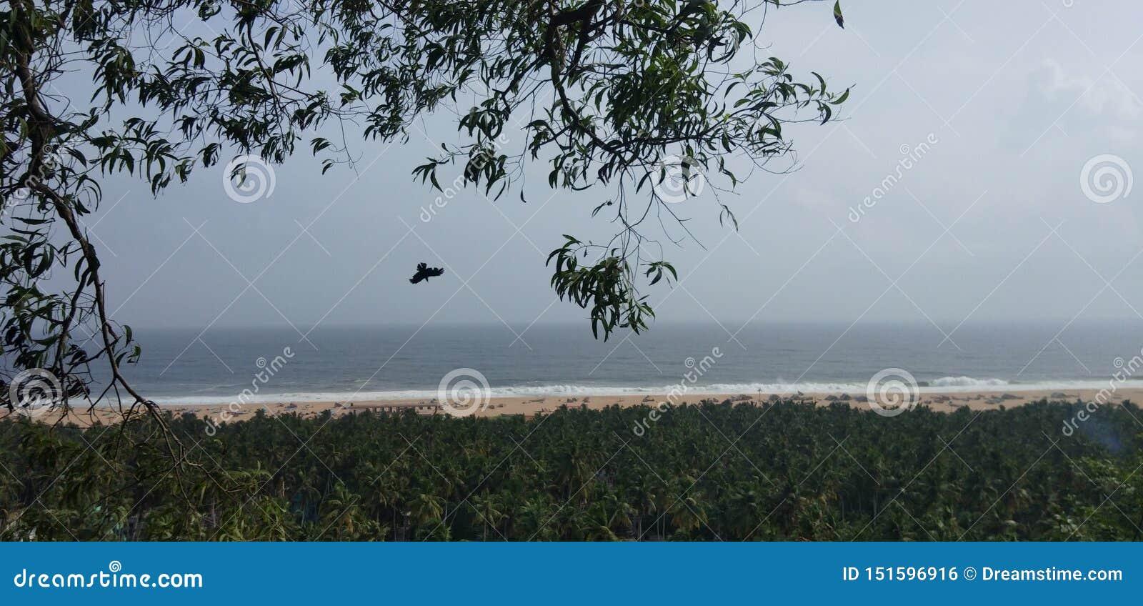 Aigle trivandrum de sable de vagues de mer de falaise
