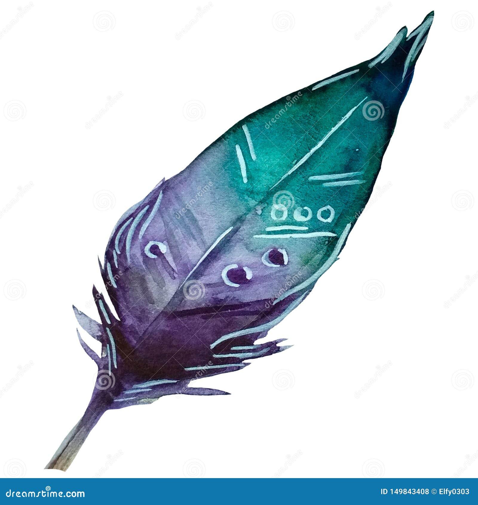 Aigue-marine tirée par la main d aquarelle et plume violette avec l ornement blanc