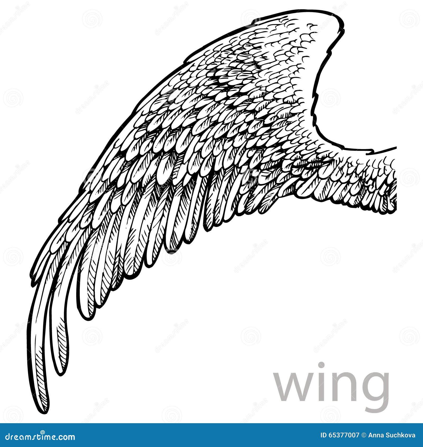 Aile de dessin de vecteur avec des plumes illustration de - Aile de dragon dessin ...