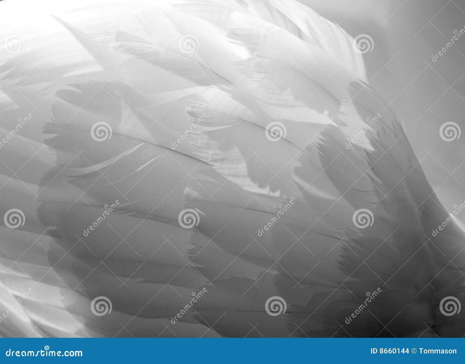 Ailes de cygnes