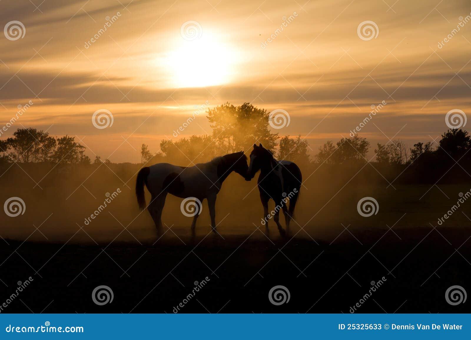 Aimez les chevaux
