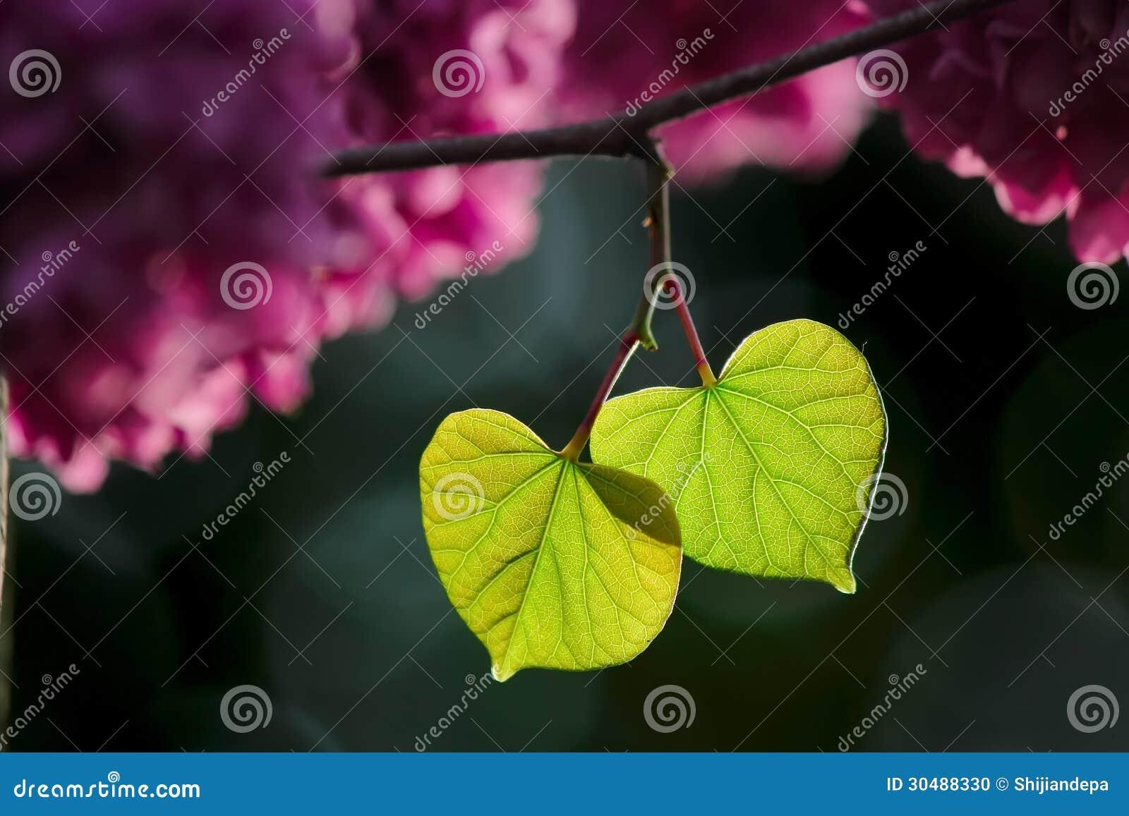 Aimez les feuilles vertes