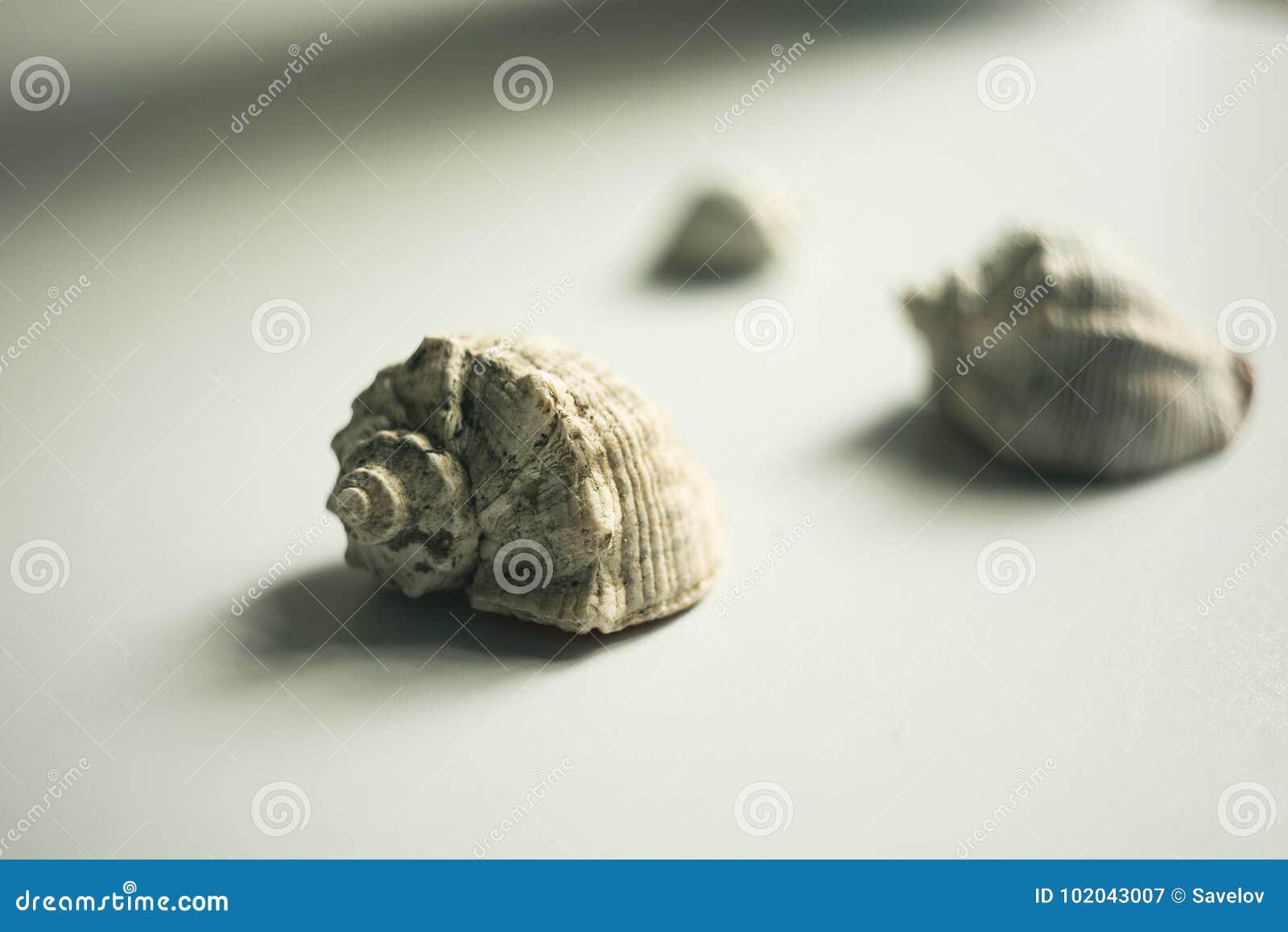 Ainda vida com conchas do mar em um fundo claro