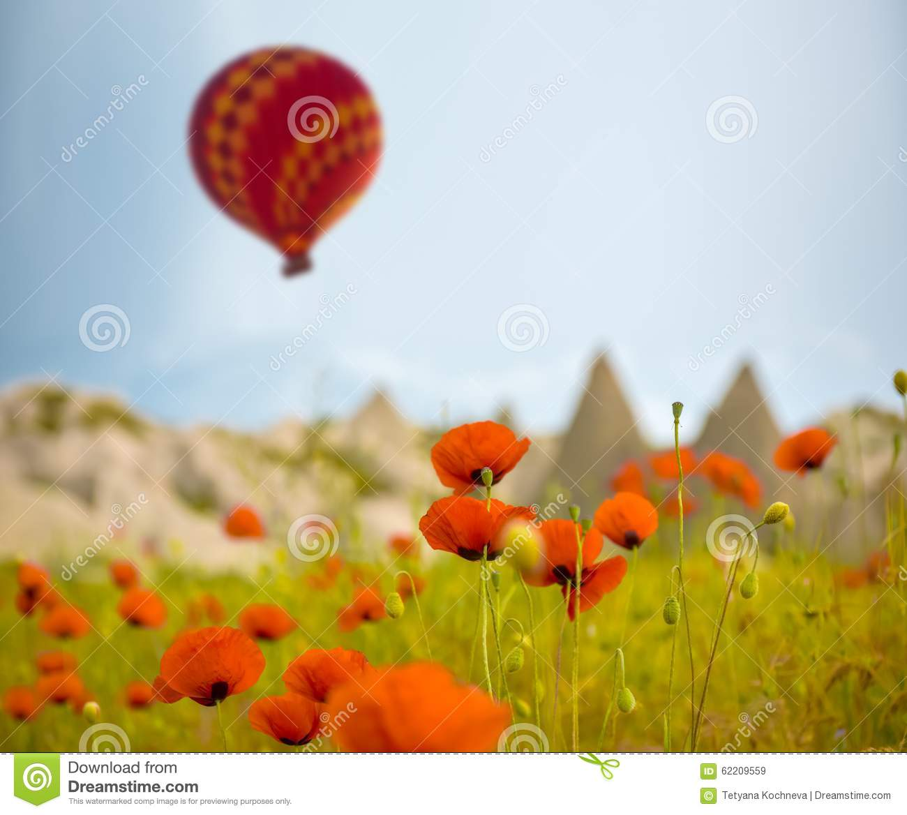 Air balloon over poppies field Cappadocia, Turkey