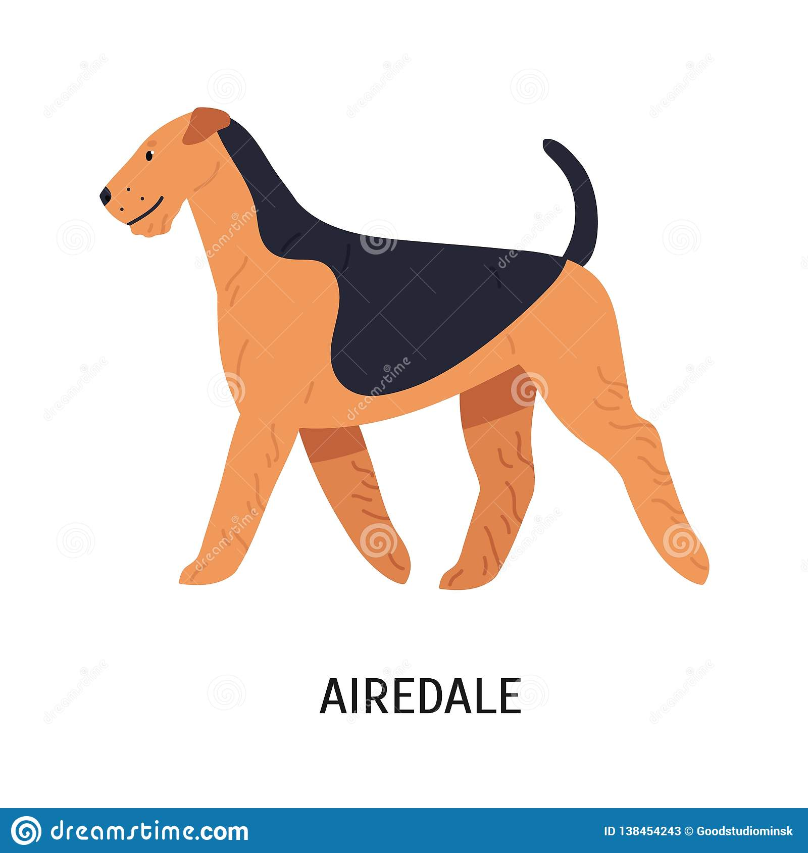 Airedale Bingley Or Waterside Terrier Beautiful Dog Of Hunting