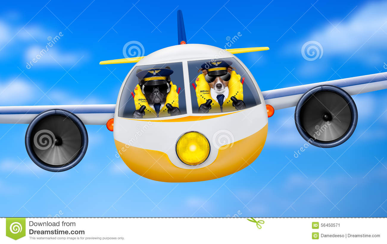 Airplane pilot dogs stock image image of life steward for Can service dogs fly in cabin