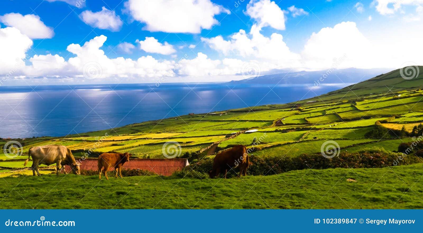 Ajardine com campos da agricultura na ilha de Corvo, Açores, Portugal