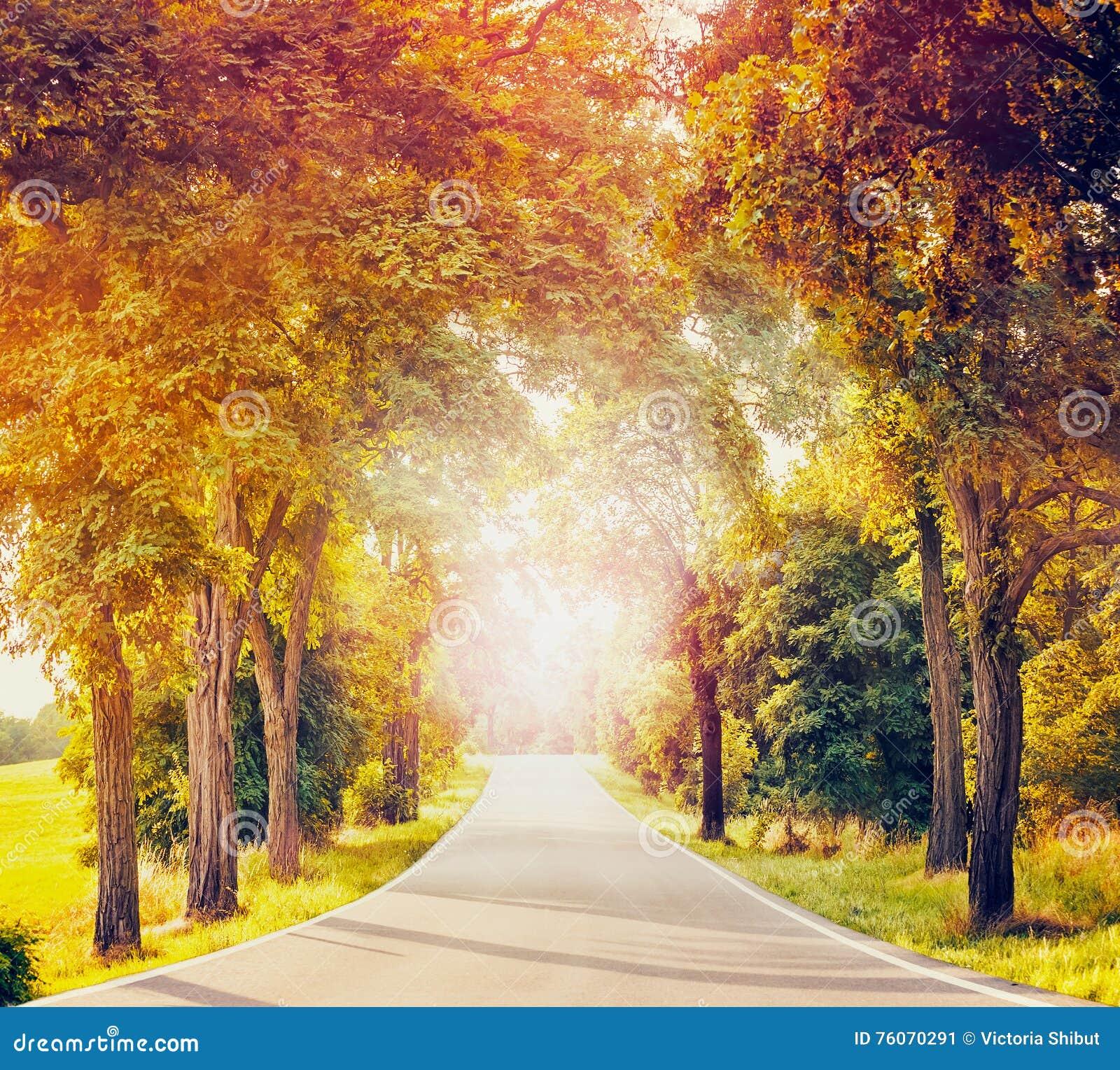 Ajardine com estrada secundária, as árvores do outono e luz solar asfaltadas