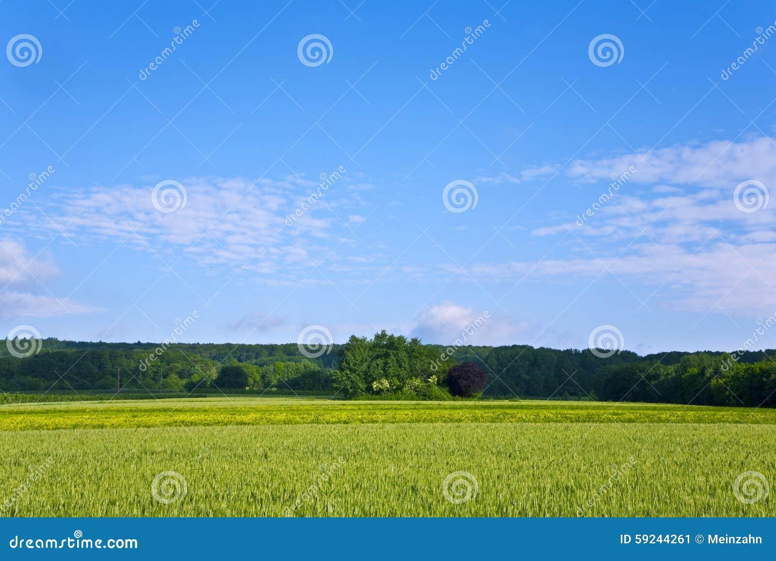 Download Ajardine Con Acres, Maíz Y Nubes Blancas Imagen de archivo - Imagen de oído, área: 59244261