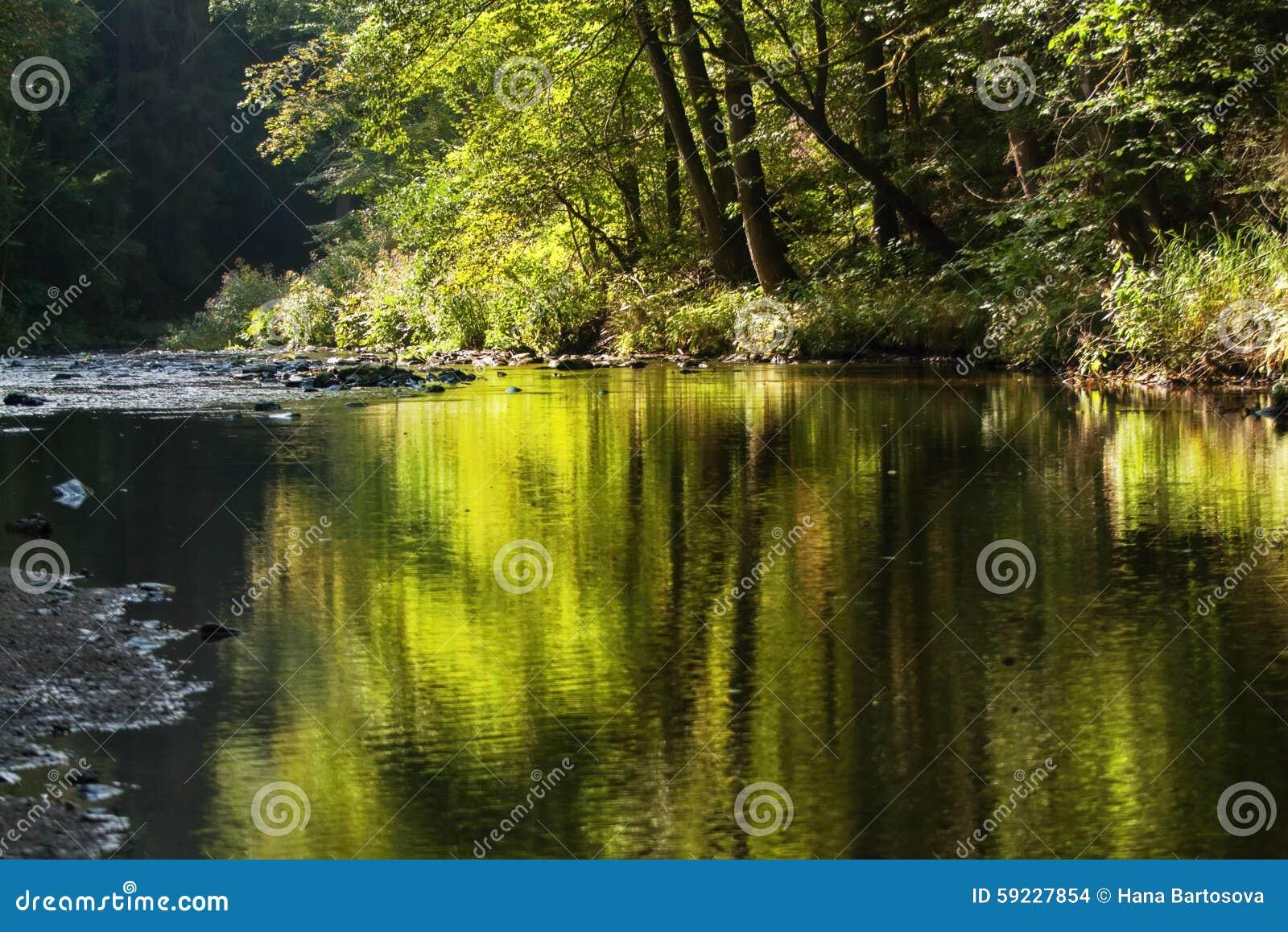 Ajardine con el río, los árboles y la reflexión en superficie