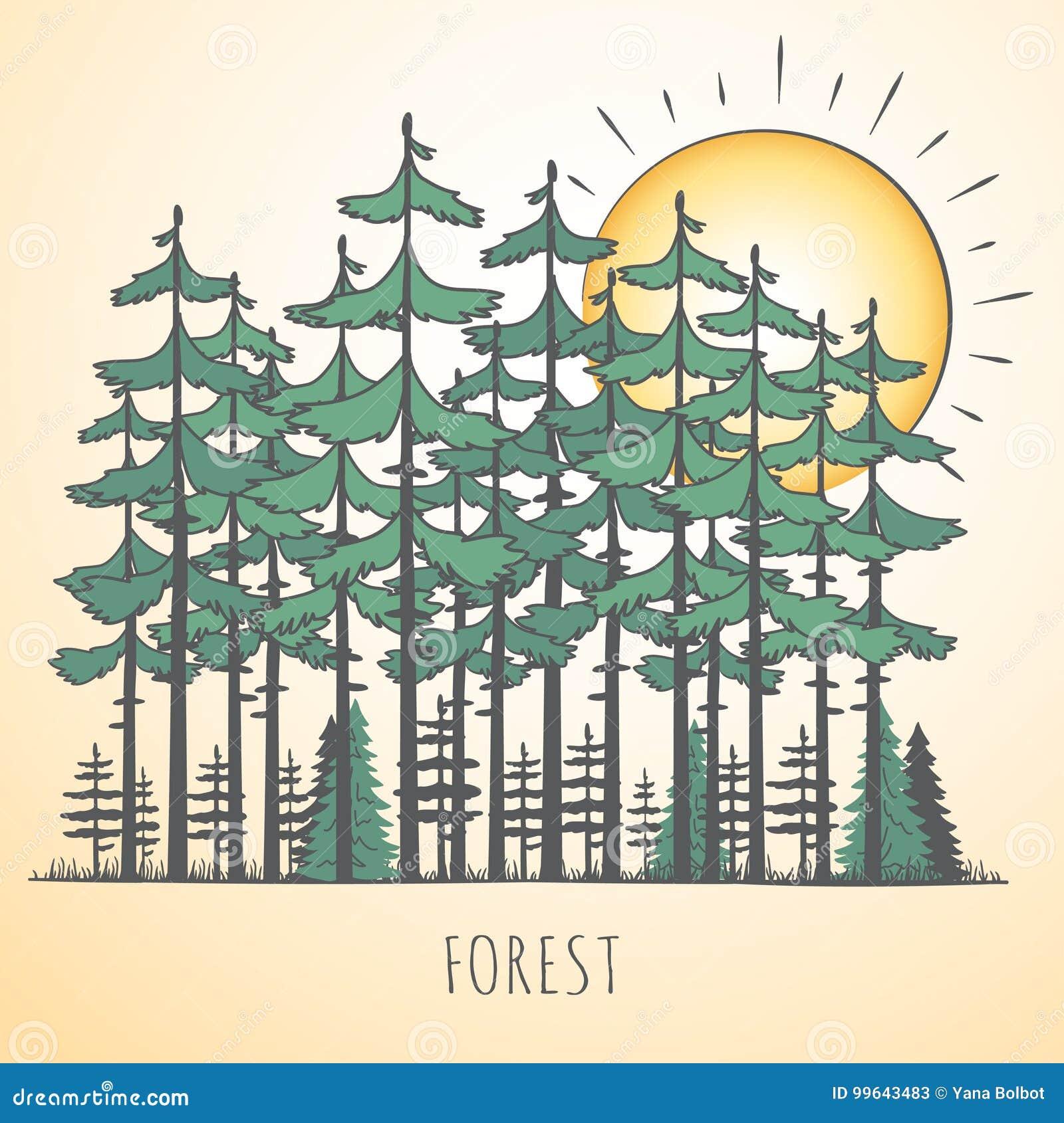 Ajardine con los árboles de pino
