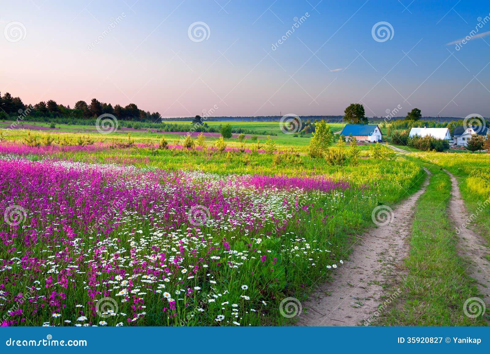Ajardine con un prado floreciente, el camino y una granja