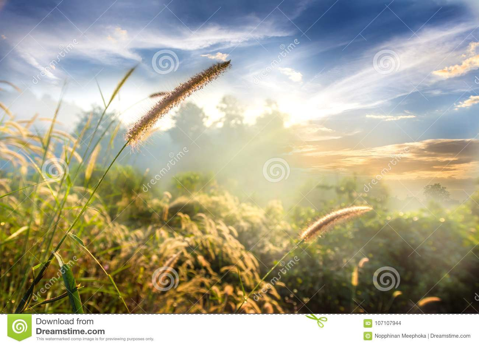 Ajardine a natureza da grama da flor na névoa macia com o céu azul e as nuvens bonitos