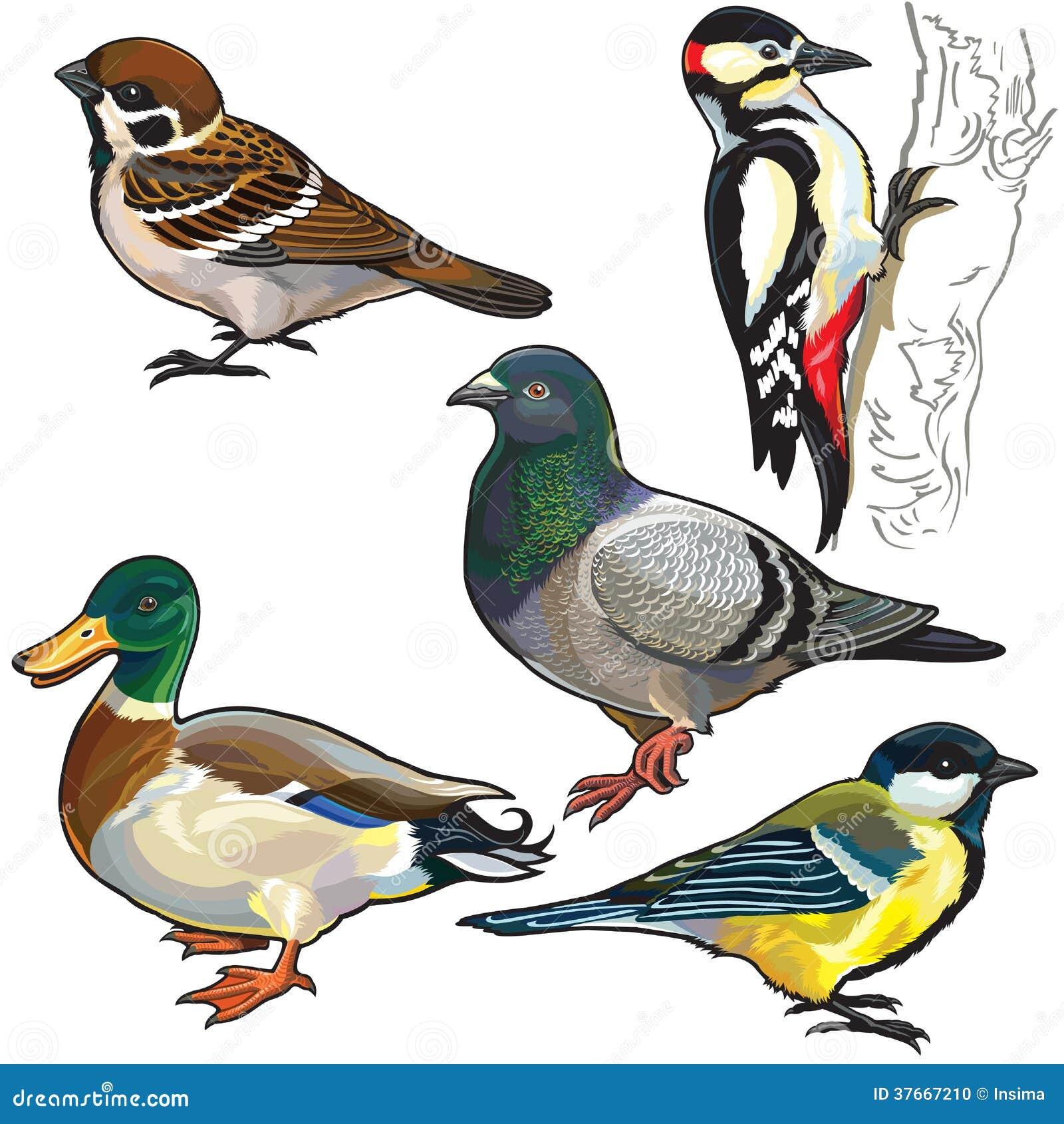 Ajuste com pássaros europeus