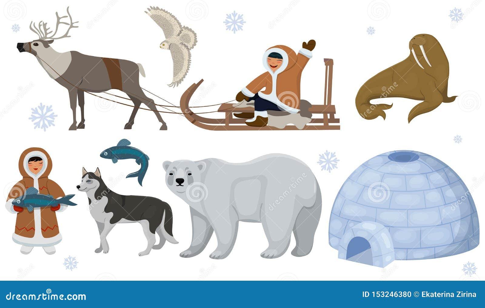 Ajuste dos esquimós étnicos com animais polares Coruja polar, urso, morsa, cervo Ilustra??o do vetor isolada no fundo branco