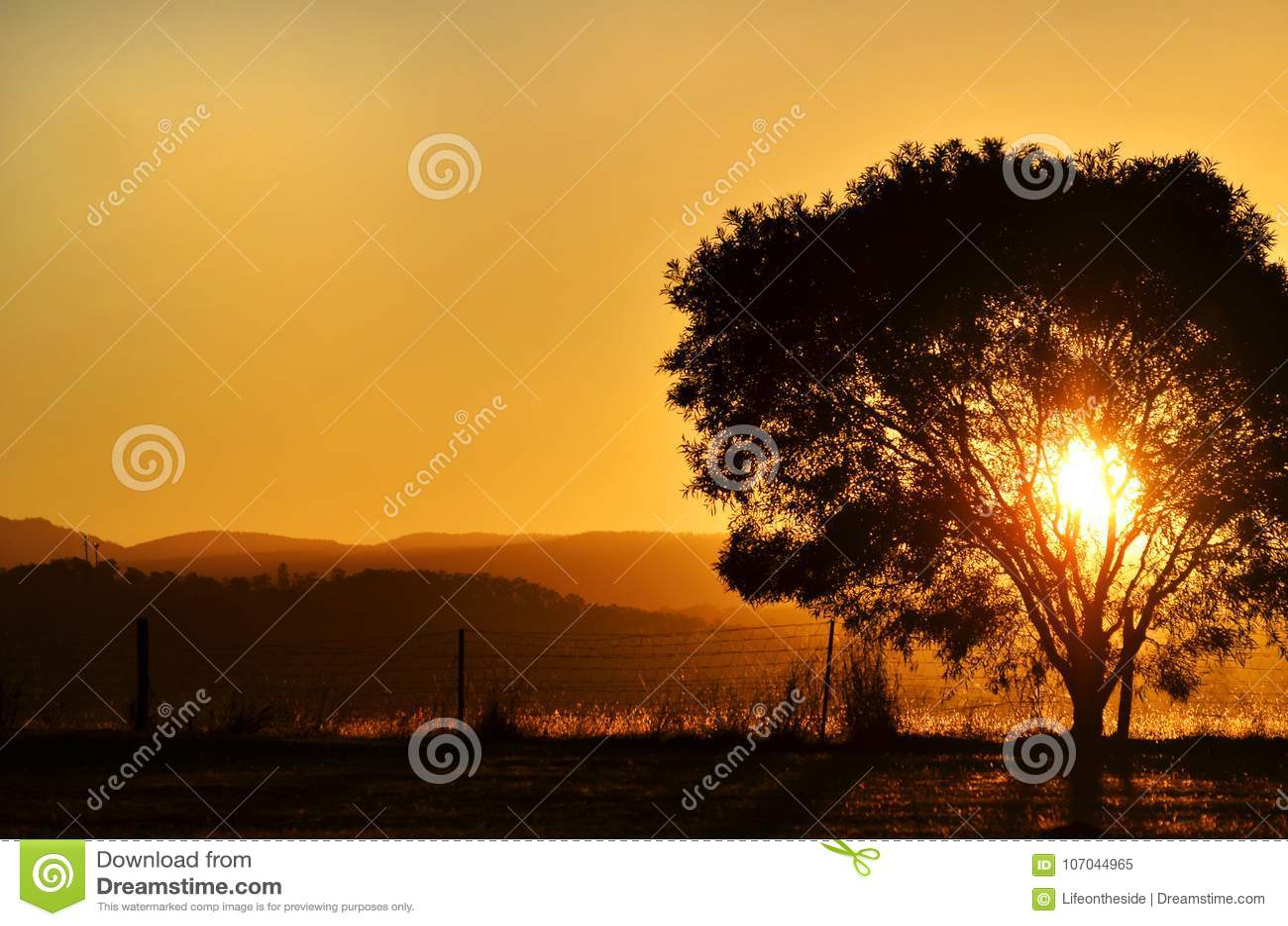 Ajuste imponente del sol de la puesta del sol detrás del árbol, montañas Australia rural