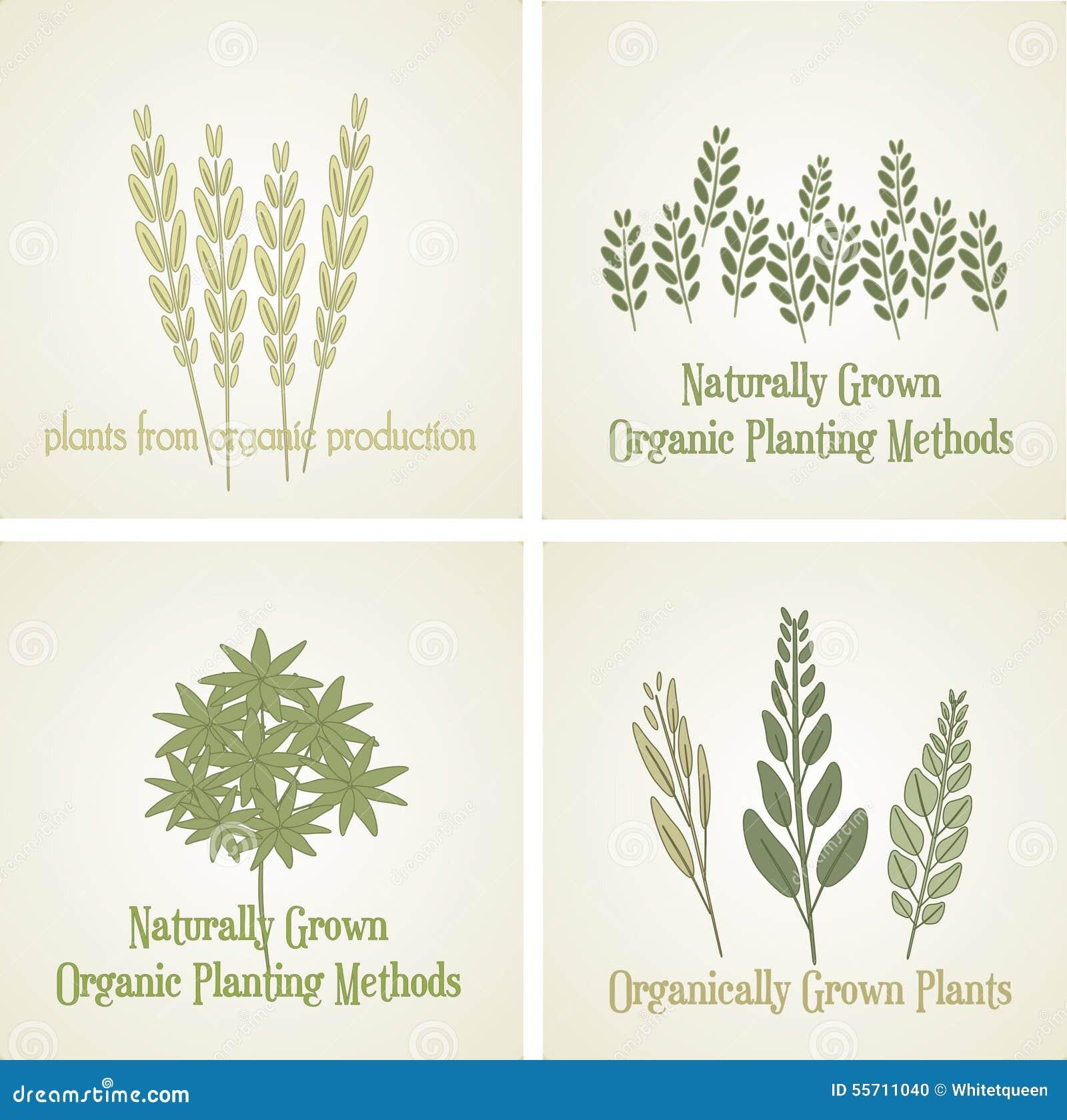 Ajuste a planta orgânica do logotipo, vetor