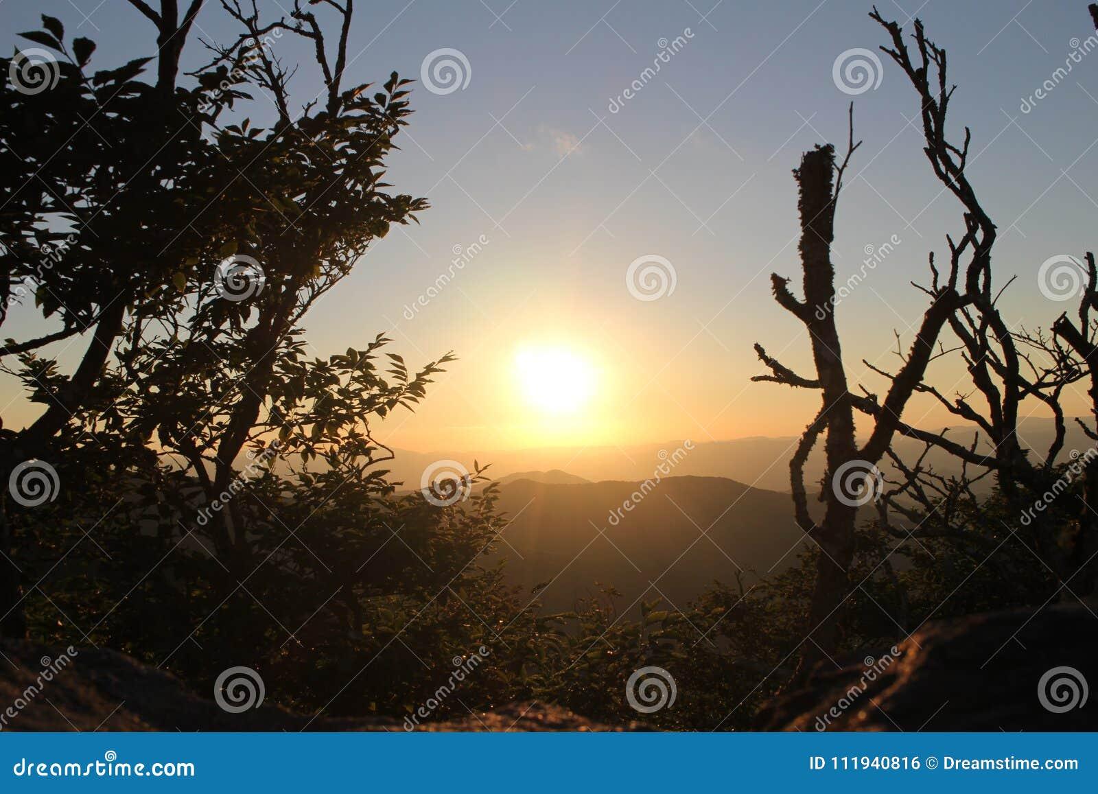 Ajuste Sun que repica através das árvores
