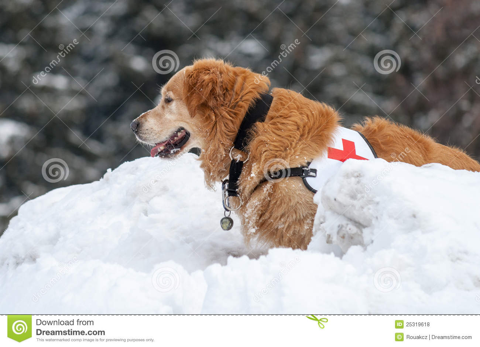 Akci psa ratunek