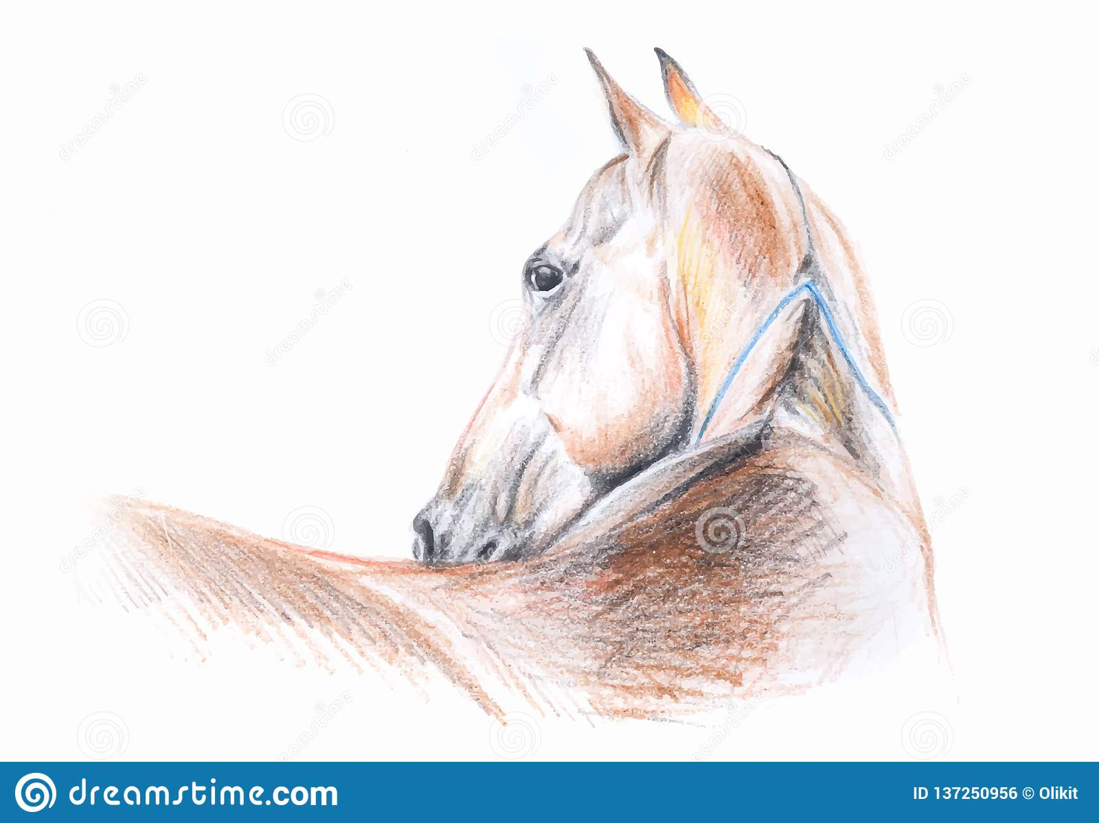 Akhal Teke Horse Color Pencil Drawing Portrait In Vector Format Stock Illustration Illustration Of Chestnut Vector 137250956