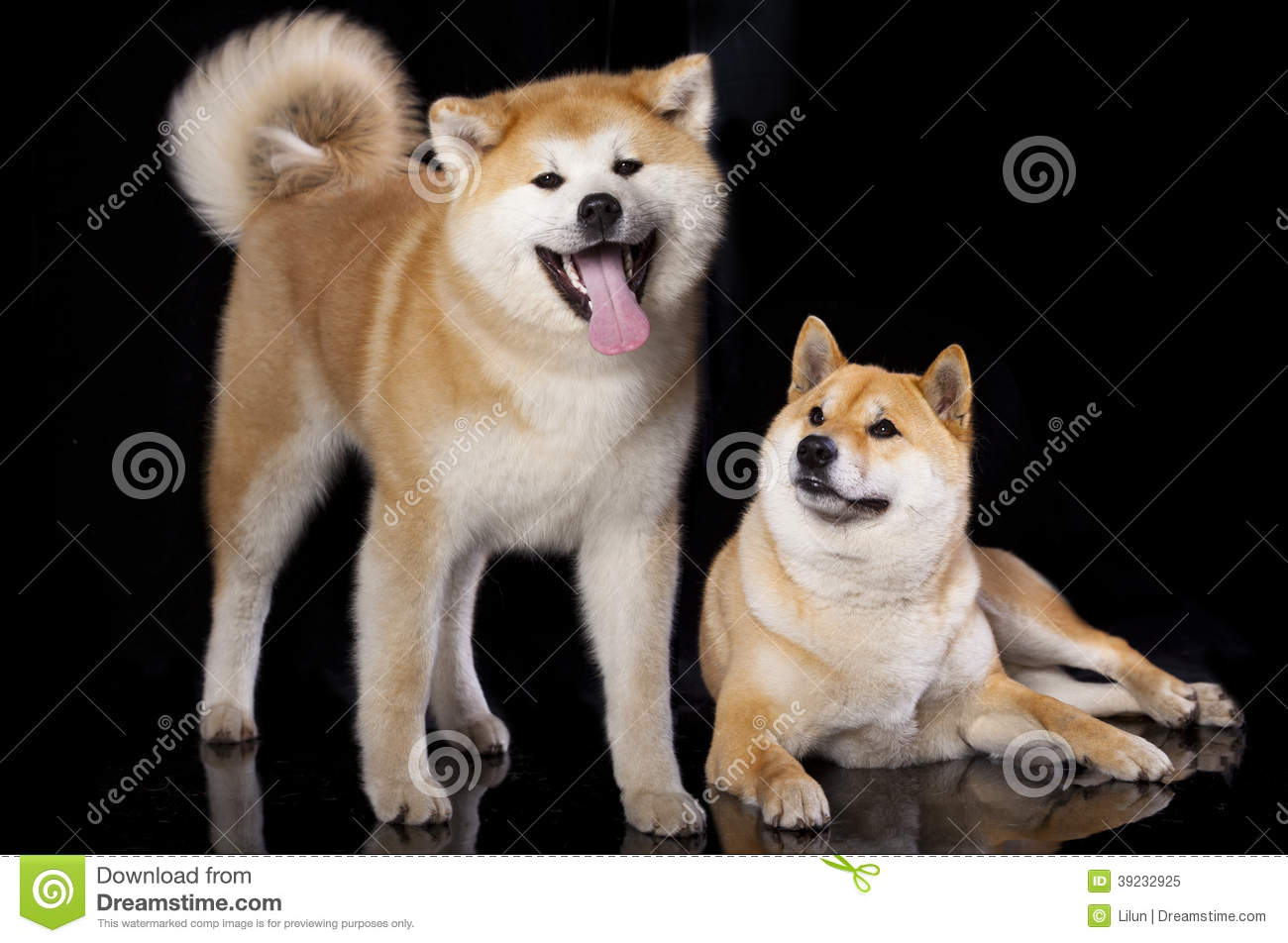 Akita Pit Dog Breed Information and Pictures Akita pitbull mix pictures