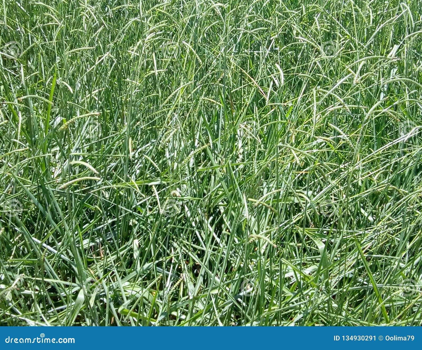 Aktuellt gräs