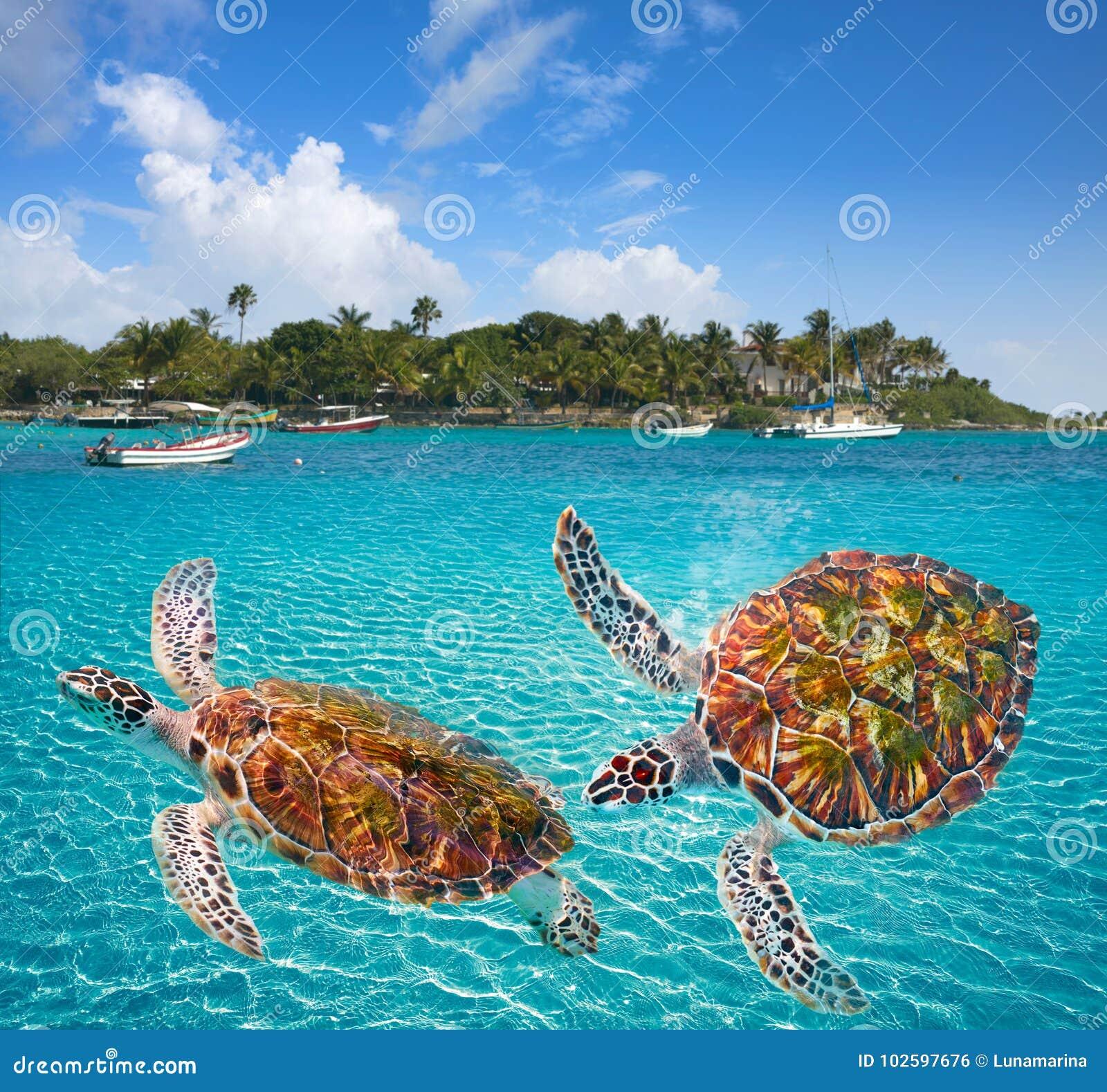Akumal beach turtles photomount Riviera Maya