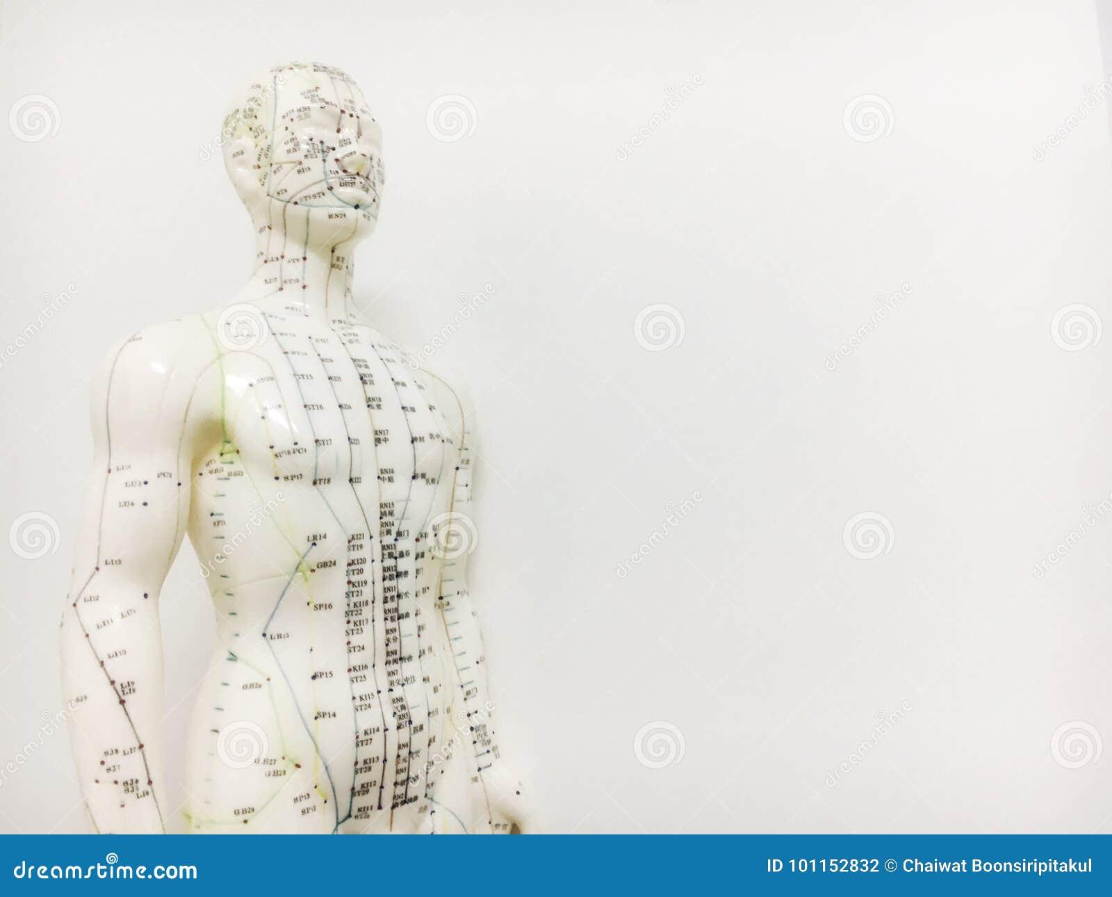 Akupunkturpunktmodell