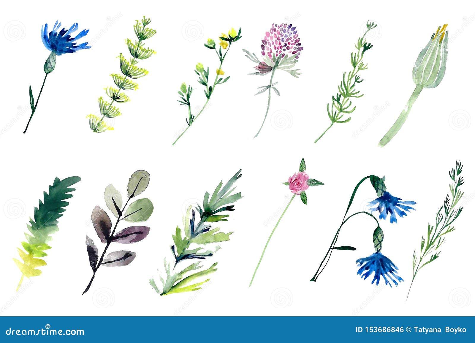 Akvarellfältväxter