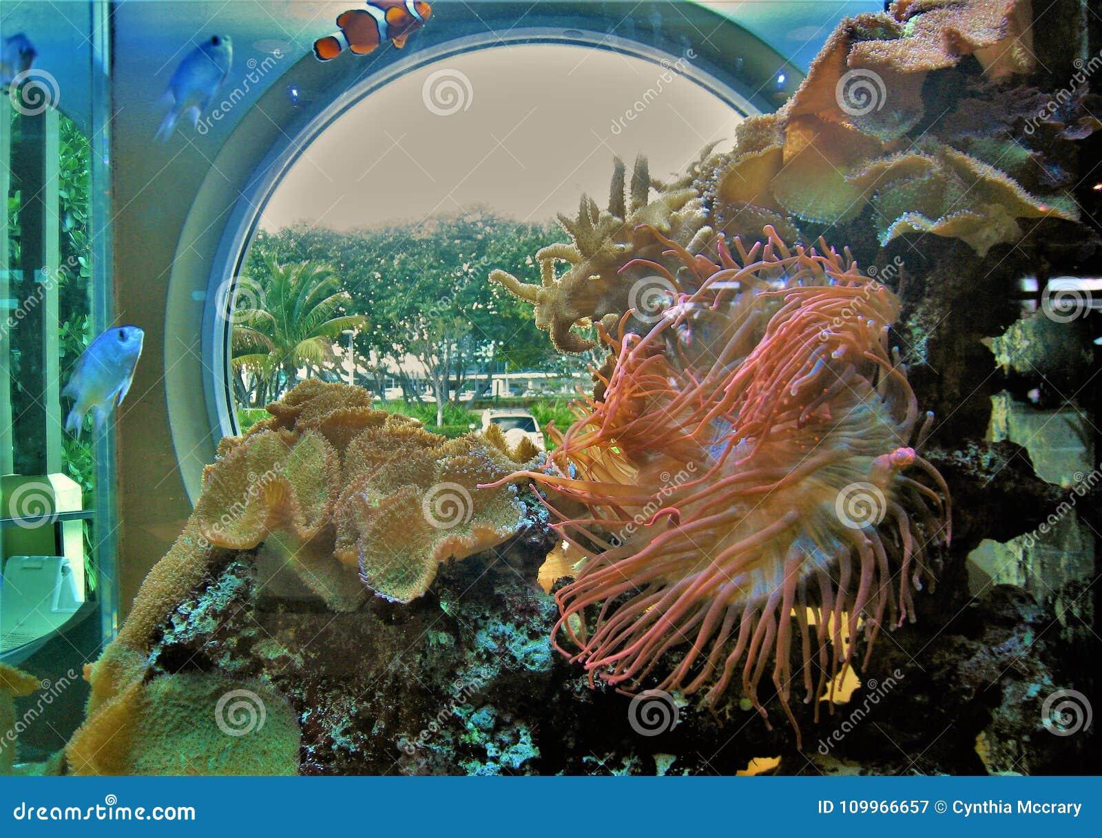 Akvarium på den LoggerheadMarinelife mitten