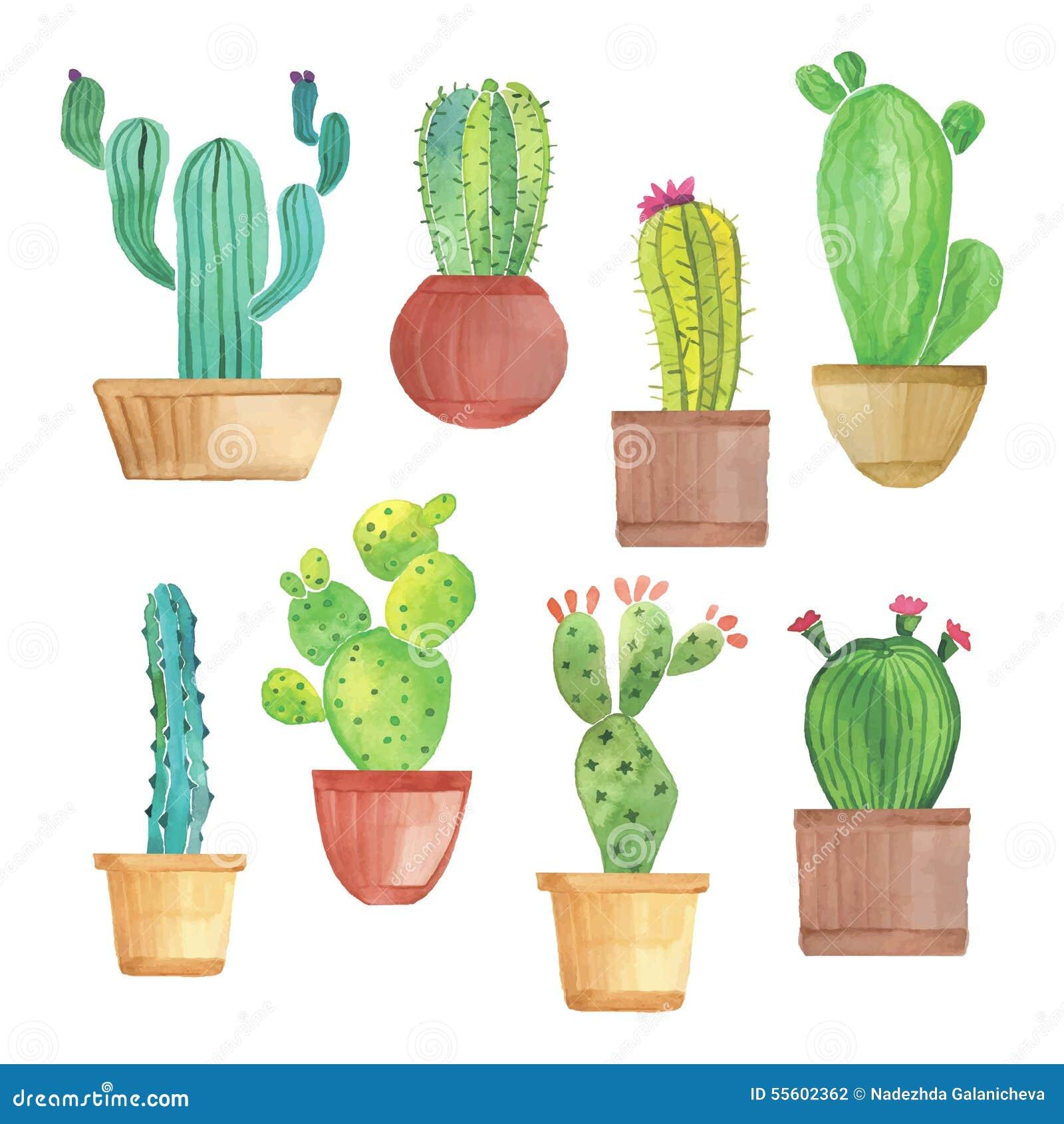 Akwarela kaktusa set