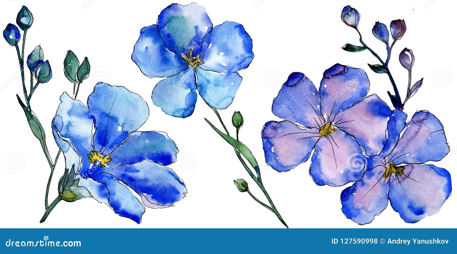 Akwarela lna błękitni kwiaty Kwiecisty botaniczny kwiat Odosobniony ilustracyjny element