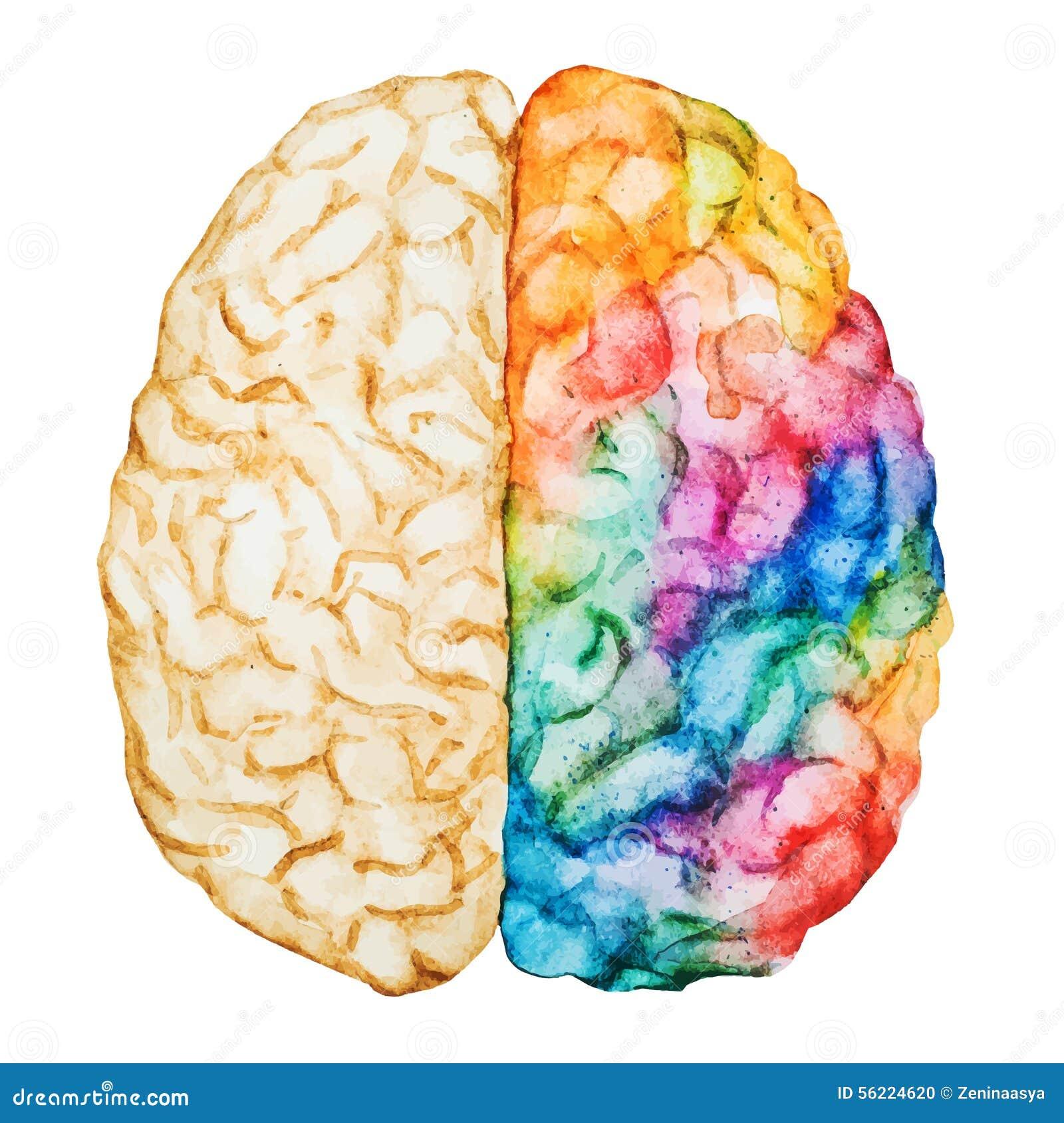 Akwarela mózg