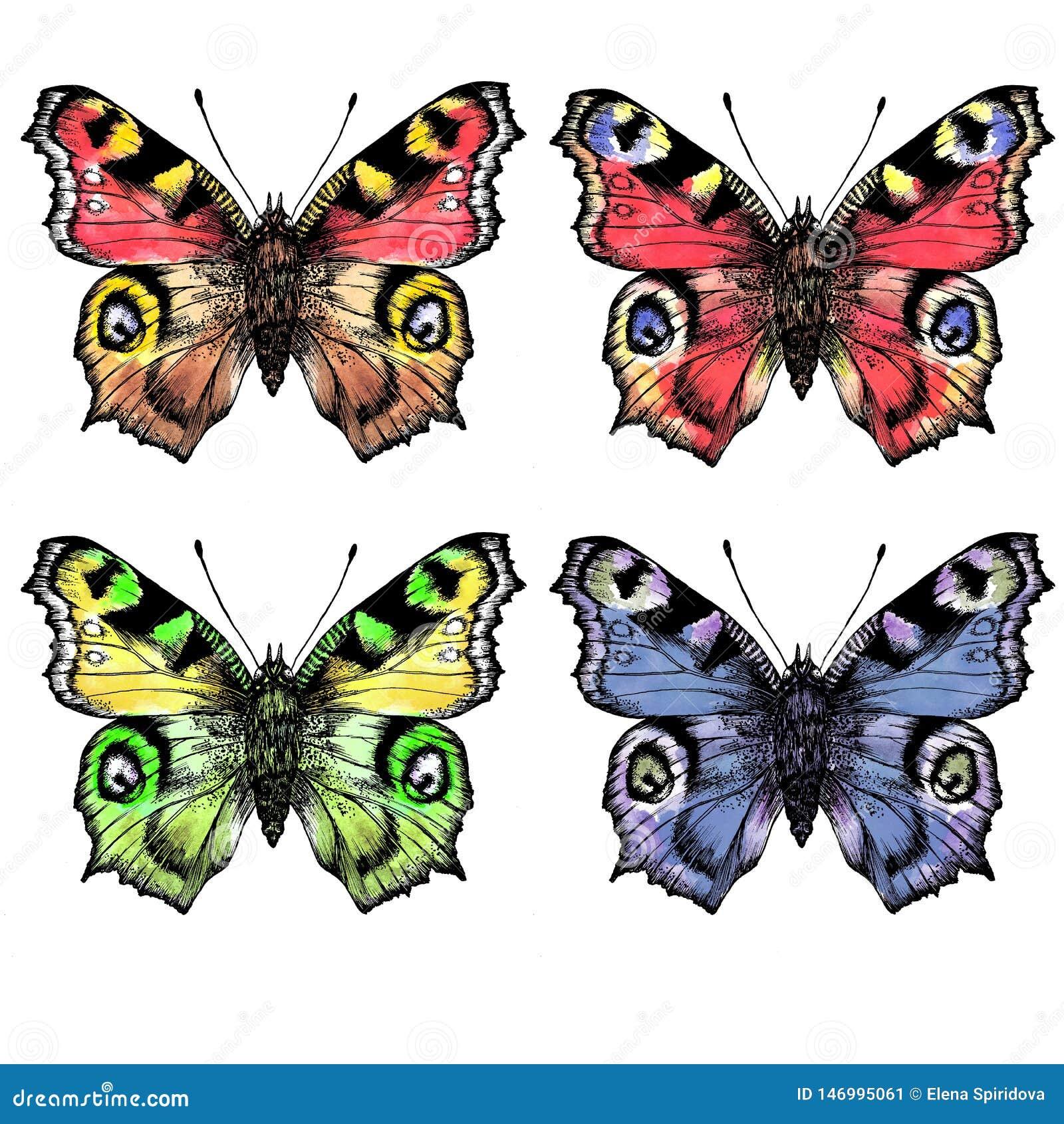 Akwarela maluję butterfliesDifferent w kolorze