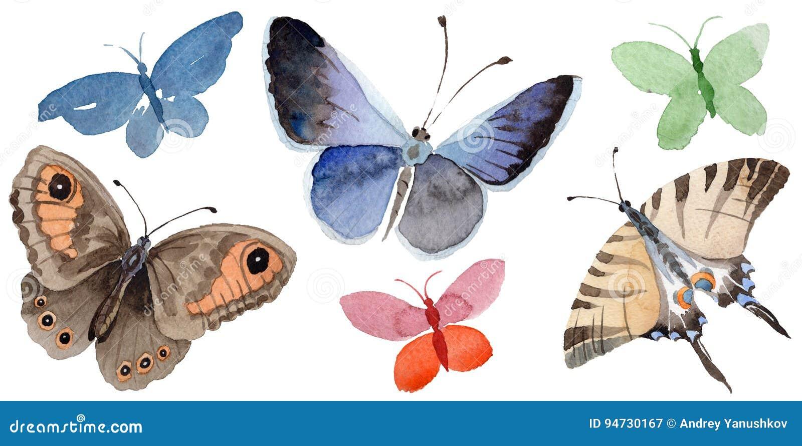 Akwarela motyla oferty insekt, intresting ćma, odizolowywał skrzydłową ilustrację