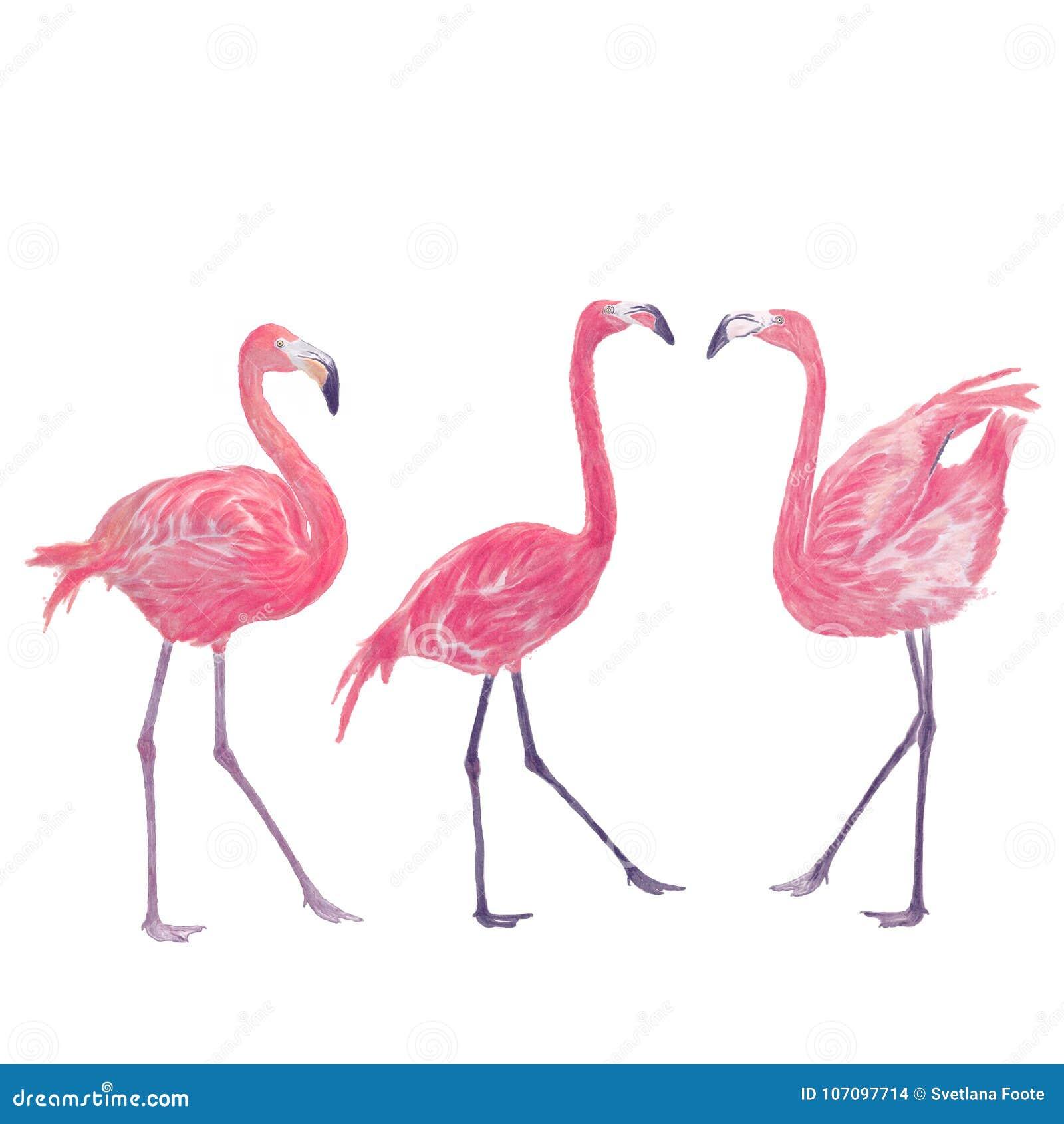 Akwarela Obraz Flamingi Ilustracji Ilustracja Złożonej Z Arte