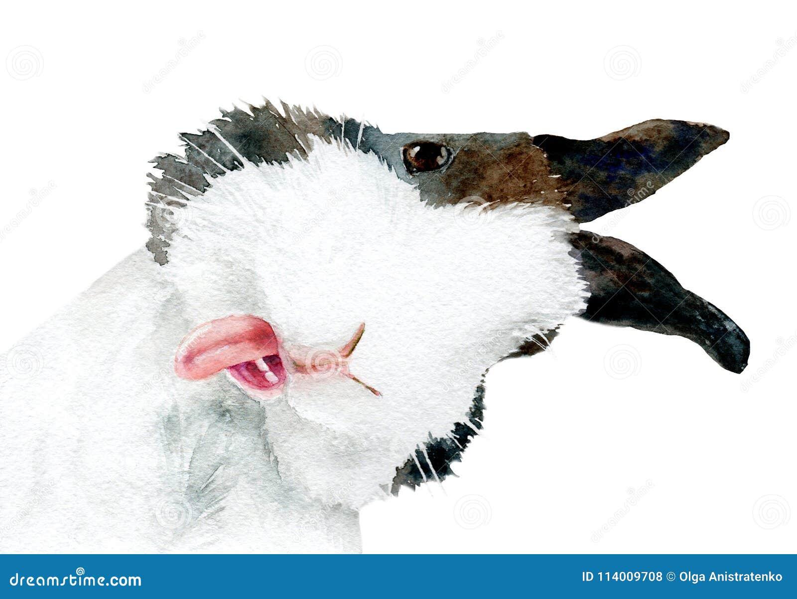 Akwarela obrazek ciekawy królik