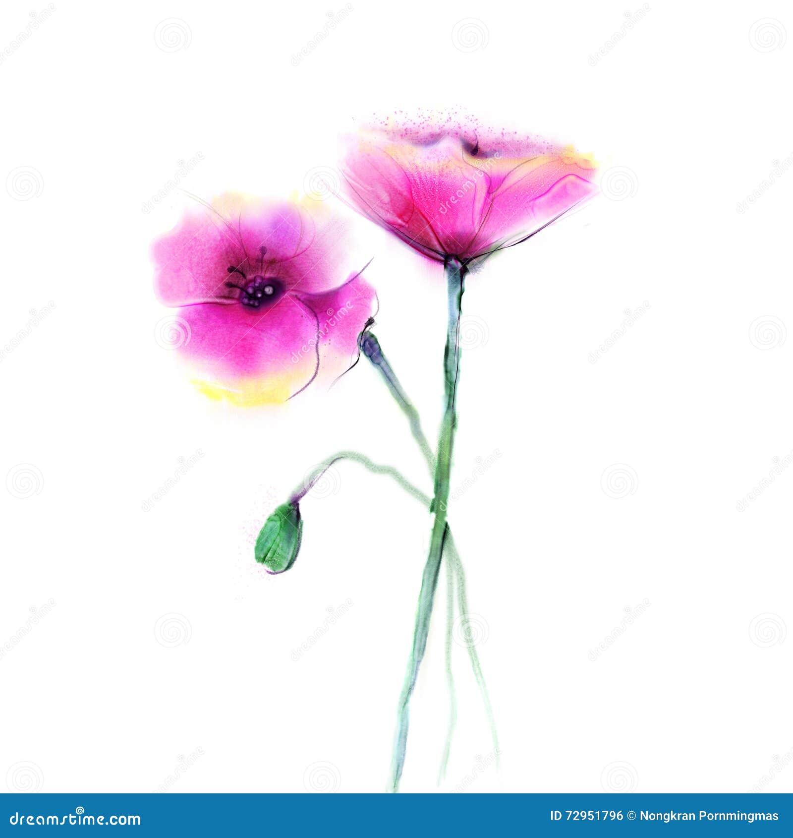 Akwarela obrazu makowy kwiat Odosobneni kwiaty na białego papieru tle