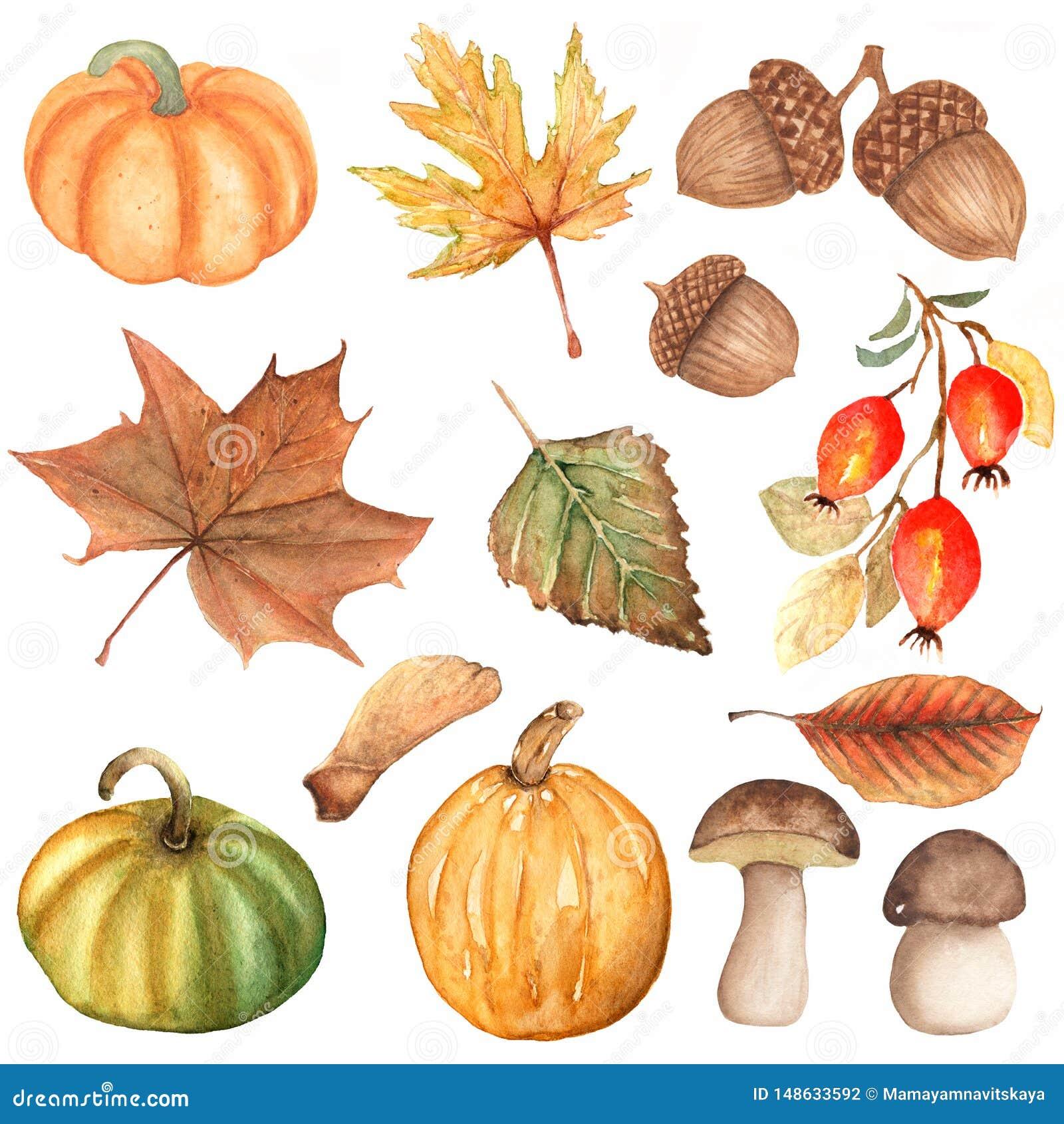 Akwarela ręka rysujący set jesień elementy bania, pieczarka, dogrose jagody, dębowi liście, brzoza liść, acorn Akwareli jesie?