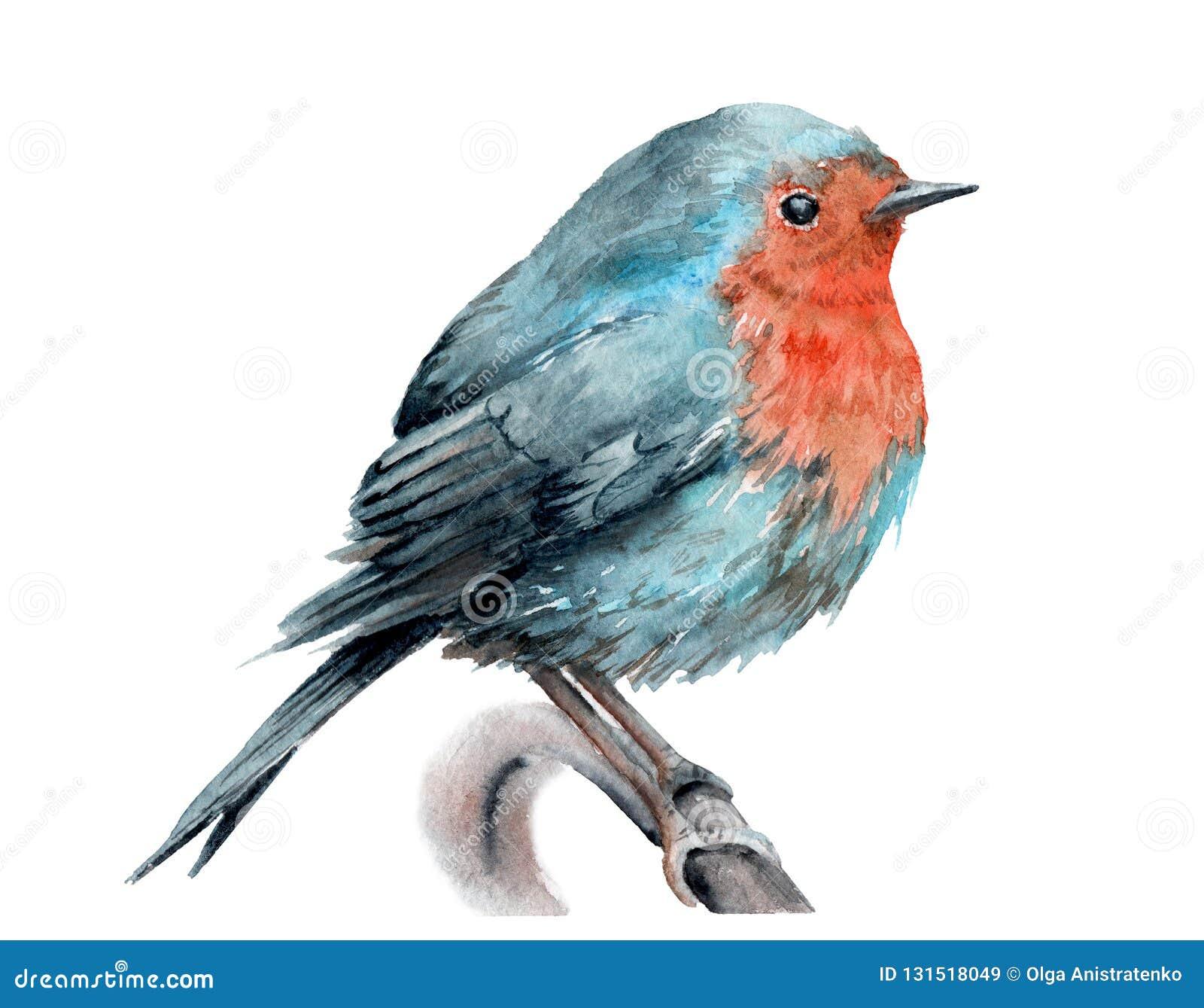 Akwarela rysunek ptak Rudzik na gałąź