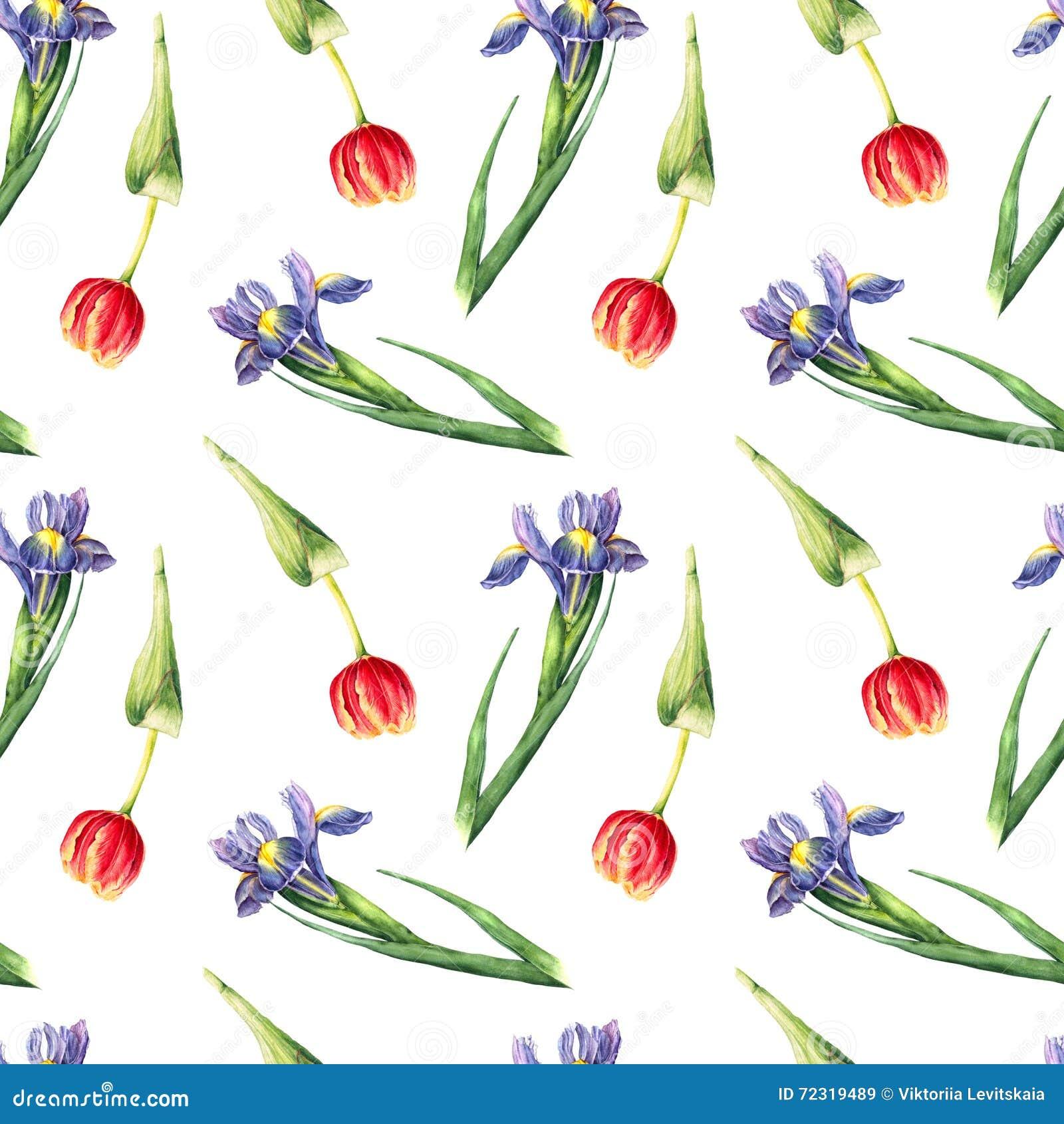 Akwarela tulipan i irysowy bezszwowy wzór na białym tle