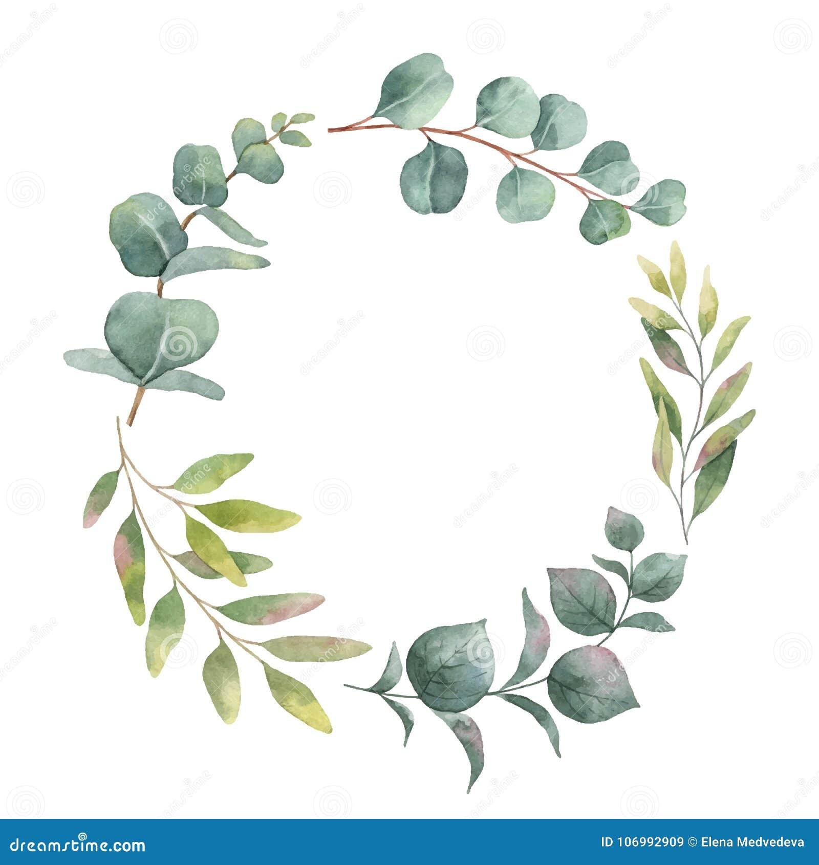Akwarela wektorowy wianek z zielonym eukaliptusem opuszcza i rozgałęzia się