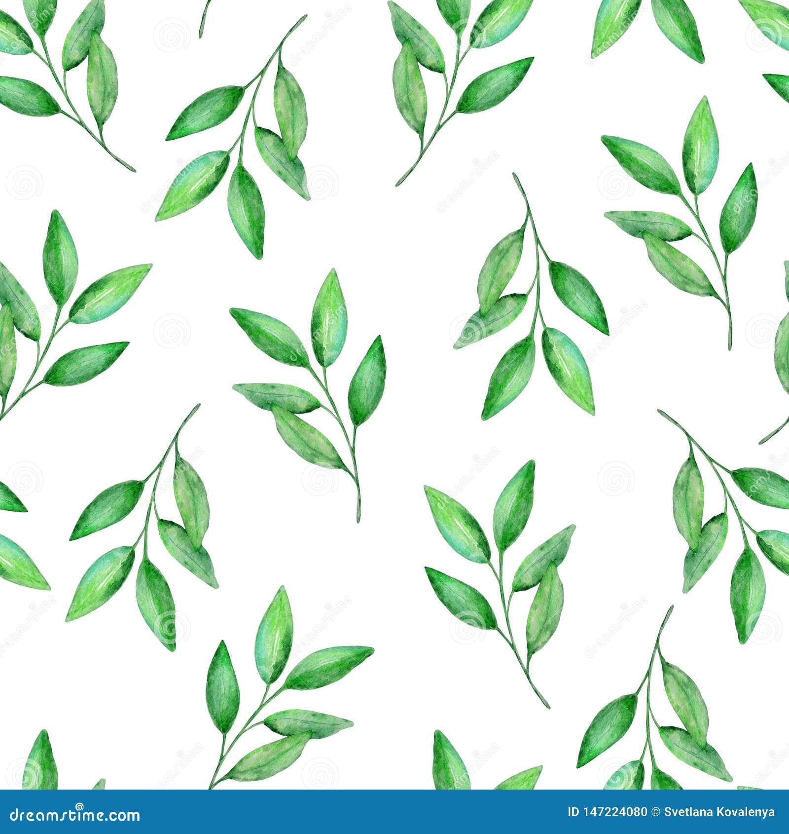 Akwarela wzoru zieleni cytryny bezszwowe gałąź