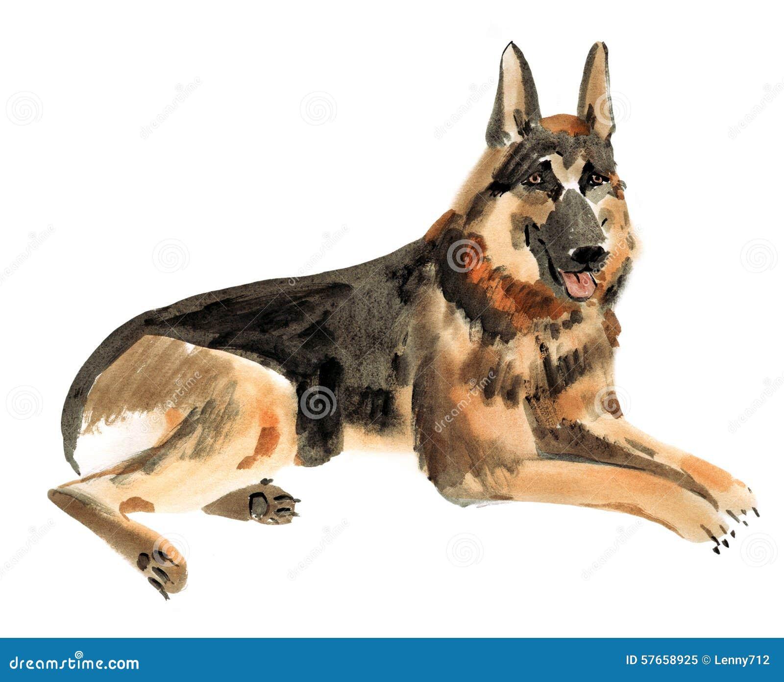 Akwareli ilustracja Niemiecki pasterski pies w białym tle