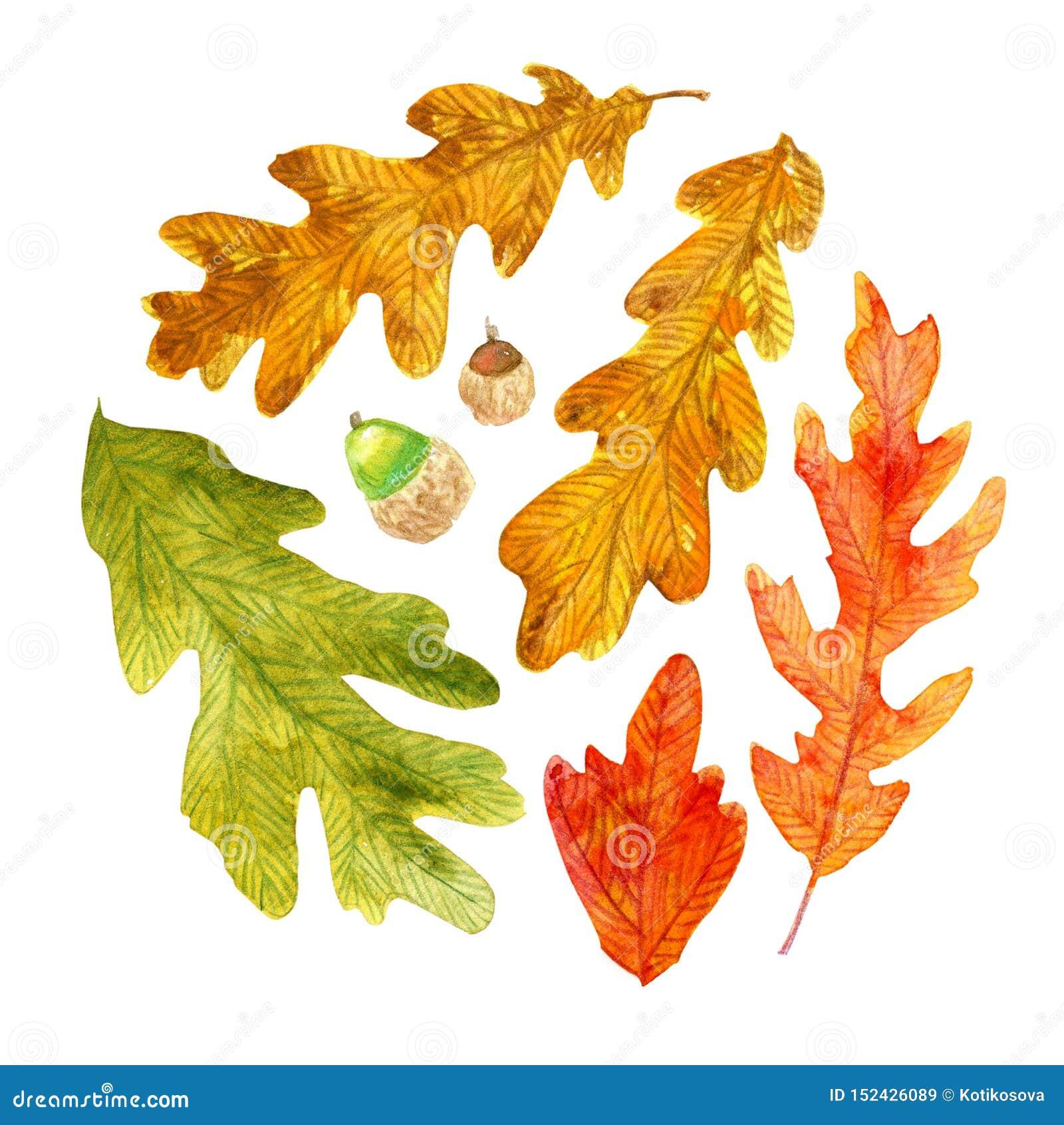 Akwareli jesieni dębowi liście w okręgu kształtują